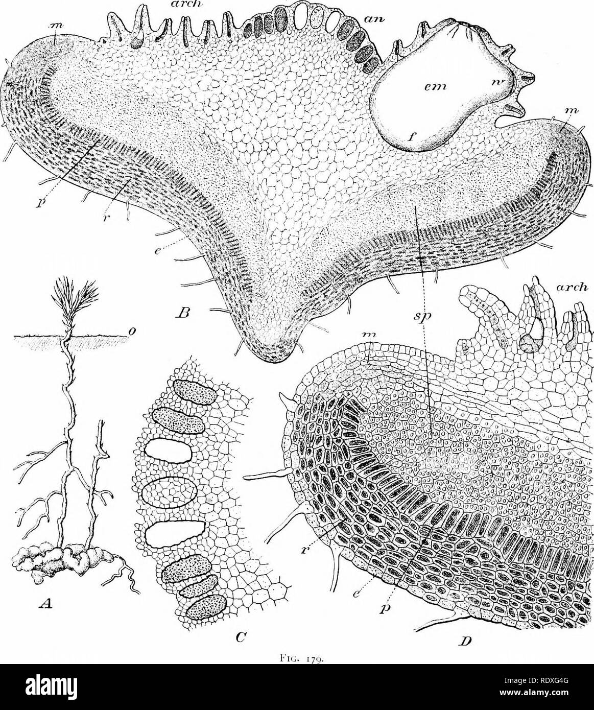 The origin of a land flora, a theory based upon the facts of