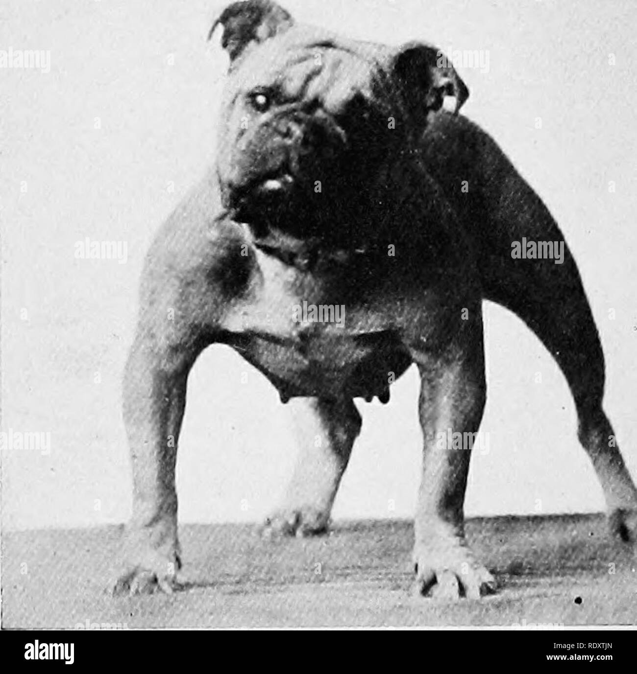 The dog book  A popular history of the dog, with practical