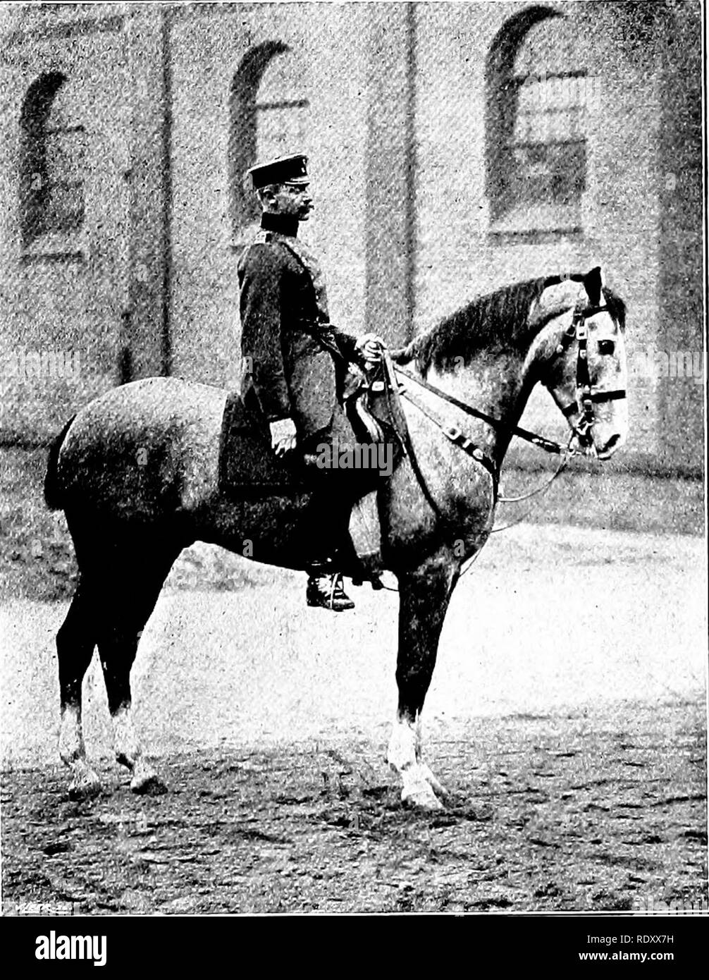 . Our domestic animals, their habits, intelligence and usefulness; tr. from the French of Gos. De Voogt, by Katharine P. Wormeley;. Domestic animals. Trumpeters ok the Cuirassiers thousand in times of war. Her remounts come chiefly from Hungary, only a few being obtained within her own borders. Belgium has more than ten thousand horses, and her annual remount is one thousand ; the draft or transportation horses are easily derived from the Ardennes. The breeding of cavalry horses is encouraged to the utmost by the government. England has an annual need of nearly three thousand remounts, which i Stock Photo
