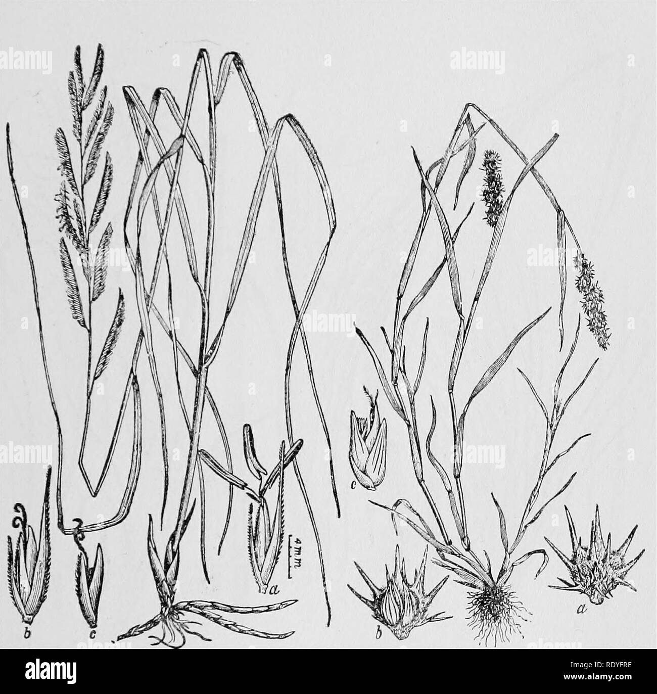10af21aa8b9b9 Sharp Leaves Black and White Stock Photos   Images - Alamy