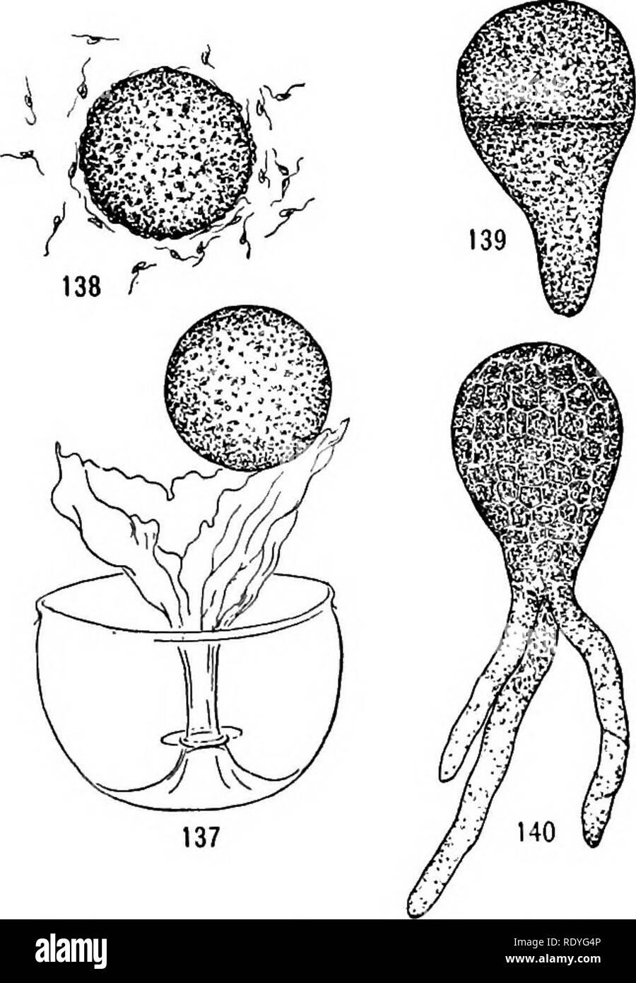 A textbook of botany for colleges and universities     Botany  52