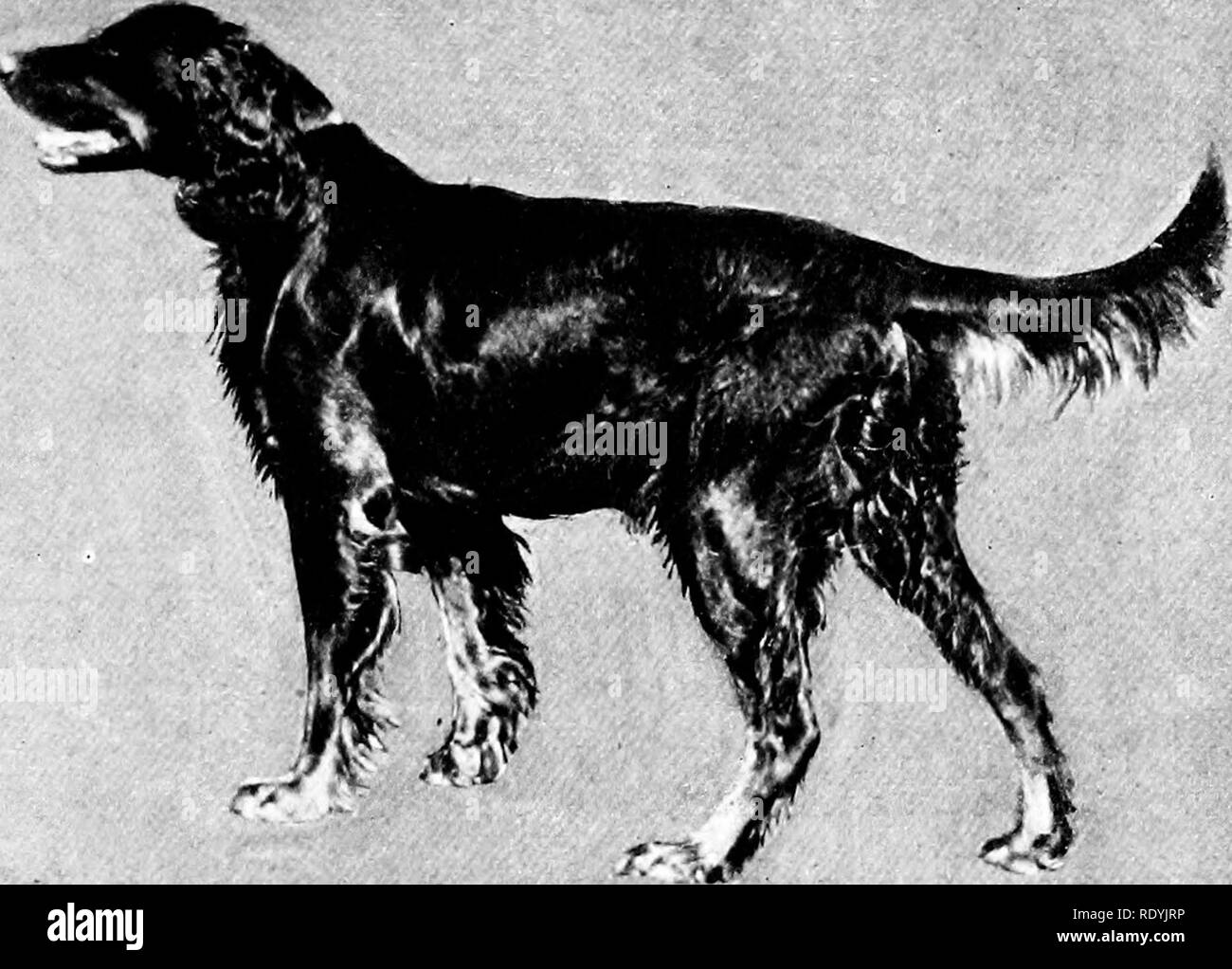 The Doc Black and White Stock Photos & Images - Page 3 - Alamy