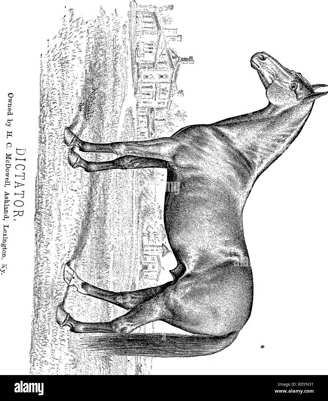 . Chester's Complete trotting and pacing record, containing summaries of all races trotted or paced in the United States or Canada, from the earliest dates to the close of 1883. Horse-racing. . Please note that these images are extracted from scanned page images that may have been digitally enhanced for readability - coloration and appearance of these illustrations may not perfectly resemble the original work.. Chester, Walter T. New York, The Compiler - Stock Image