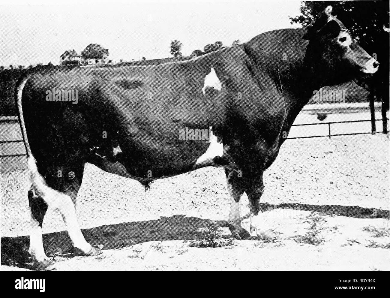 . The Guernsey breed. Guernsey cattle. 374 The Guernsey Breed Blue Belle of Norwood II 27462, A. R. 2469, D 508.51 King's Maud Chene 34700, A. R. 3604, E 319-48 Corinna's King 10432, A. R. Cora°Munroe 27459, A. R. 2229, E. . ..._.. â â â 319,94 Stella of Belle Vernon II 25990, A. R. 22/9, U 398.93 (lllie's King of Belle Vernon II 14028, A. R. Efcab'eth Belle 31190, A. R. 2231, H. 402.39 Elizabeth Belle 31190, A. R. 2231, D. (re-entry) 642.34. Ollie's King of Belle Vernon 2d 14028, A. R. Kathleen Cnttie II's Daughter 33305, A. R. 2285, G... 274.82 Corinna White V 33016, A. R. 2448, G 488.46 Co - Stock Image