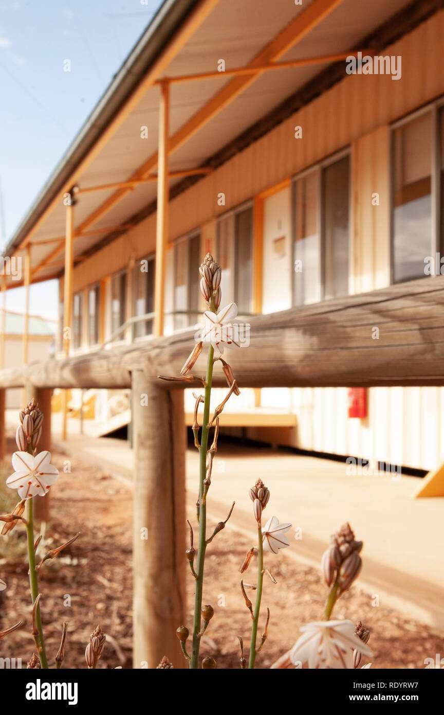 Kinchega Woolshed, Menindee, New South Wales, Australia - Stock Image