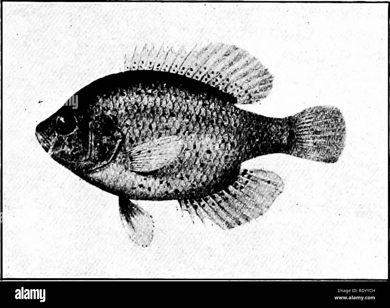 Aquarium Fish Home Black and White Stock Photos & Images - Alamy
