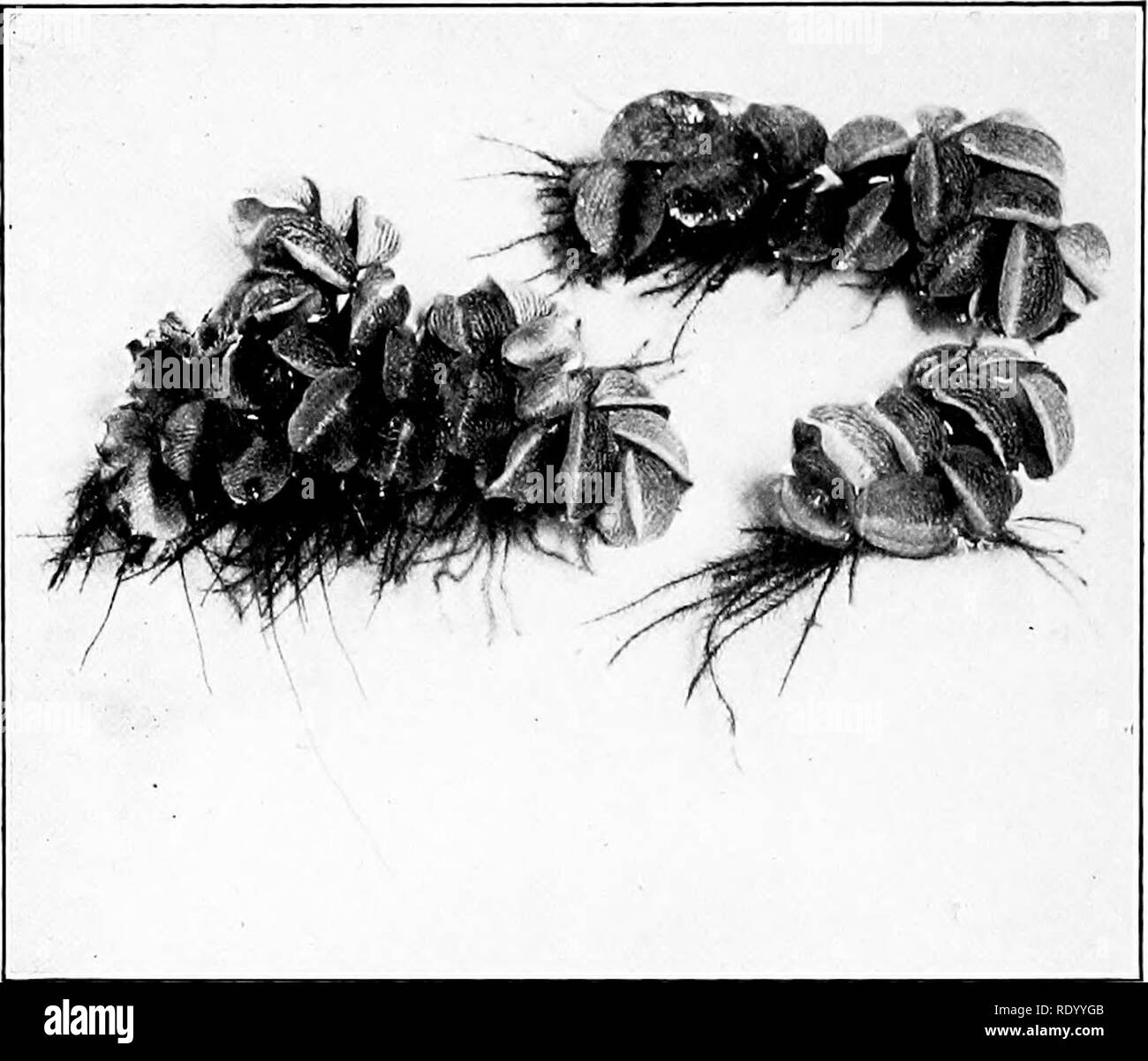 Hairs On The Leaves Black and White Stock Photos & Images