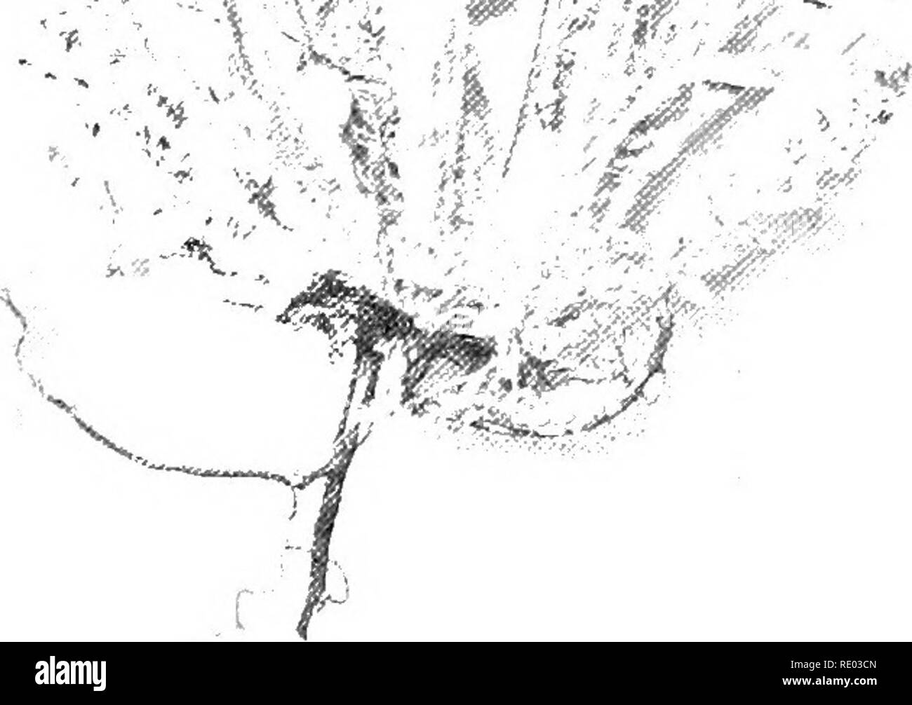 I 90 Black and White Stock Photos & Images - Alamy