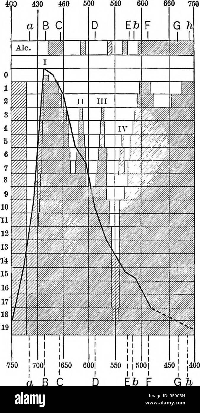 """. Experimental morphology. Protoplasm; Growth. 168 LIGHT AND PROTOPLASM [Ch. VII per minute by the submerged, illuminated plant. As is shown in Fig. 45, the maximum of gas production occurred at about absorption line B — and this is the more marked of the absorption bands of chloro- phyll. A similar result was reached by ENGELMAinsr and set forth in a long series of papers ('81, '82, '82°, '83, '83"""", '84, '86, and '87). He found that certain bacteria are extremely sensi- tive to oxygen, moving in the direction of small increments of the oxygen density. Now, by putting a thread of alga in  - Stock Image"""