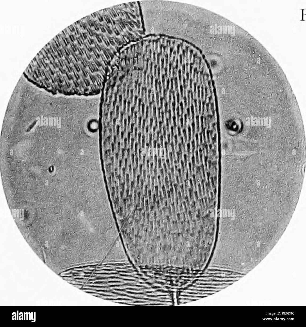 . Photo-micrographs and how to make them. Photomicrography. Fig. 3.. Please note that these images are extracted from scanned page images that may have been digitally enhanced for readability - coloration and appearance of these illustrations may not perfectly resemble the original work.. Sternberg, George Miller, 1838-1915. Boston, J. R. Osgood and company - Stock Image