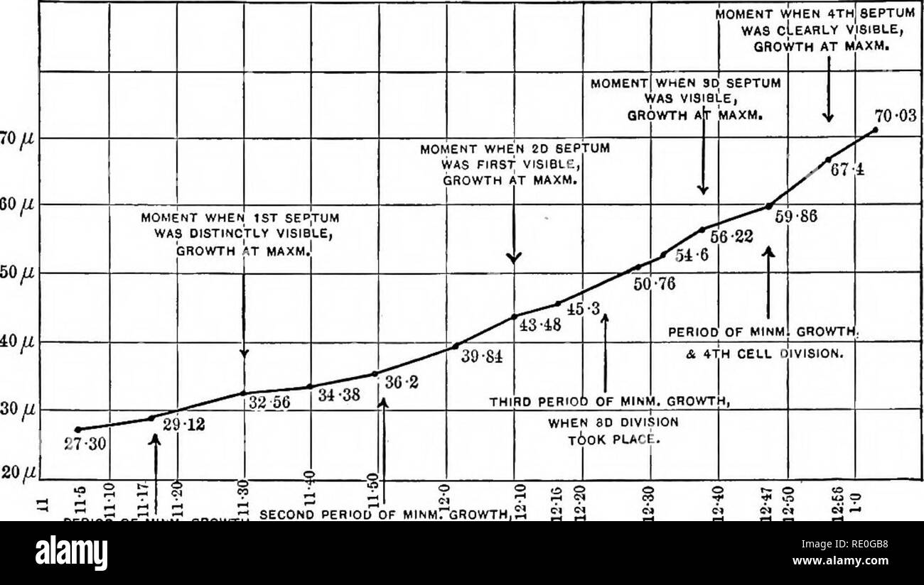 . Experimental morphology. Protoplasm; Growth. 288 INTRODUCTION [Ch. X are summarized in the curve, Fig. 79. This shows how the growth in length of the bacterial rods is delayed at intervals. ; SECOND PERIOD OF MINMrGROWTH,S WHEN 2D CELL DIVISION A WMiil FIRST CELL DIVISION OCCURRED. PERIOD OF MINM. GROVH'H, Fig. 79. — Curve of growth of a bit of a filament of Bacillus ramosus, 27.30 y- long at the beginning and 70.88 h at the end of the period of observation. The curve shows certain periods of diminished growth (indicated by the arrows below the curve), which correspond to cell-division. From - Stock Image