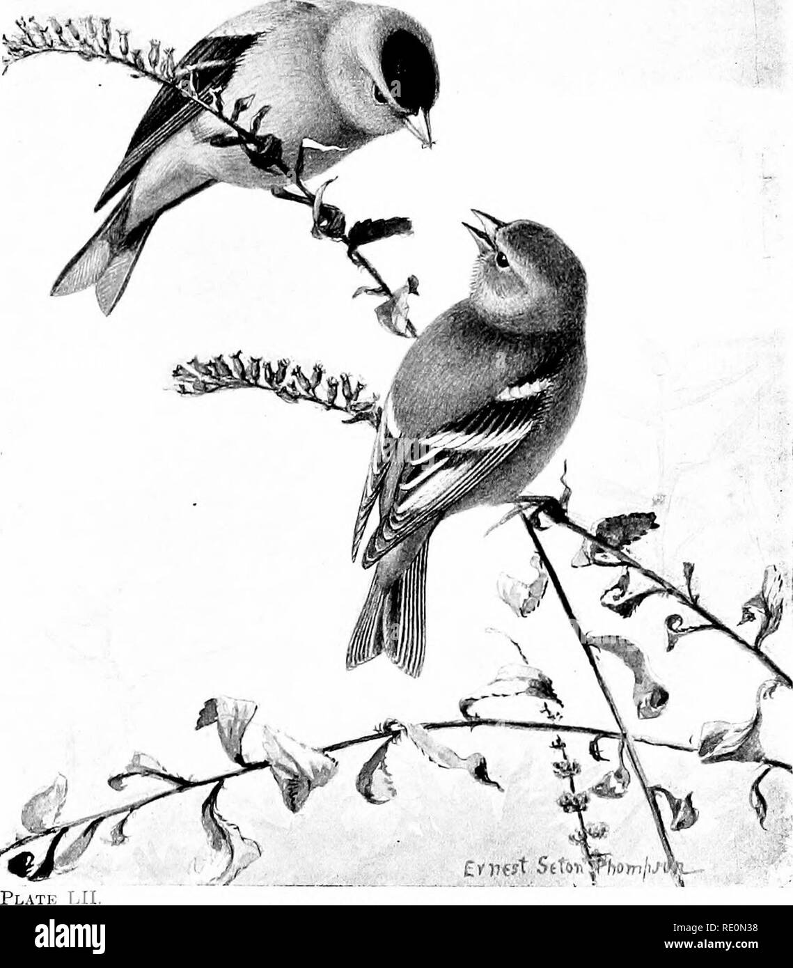 199 m stock photos 199 m stock images page 2 alamy 1970 Nova SS Yellow bird life a guide to the study of our mon birds birds
