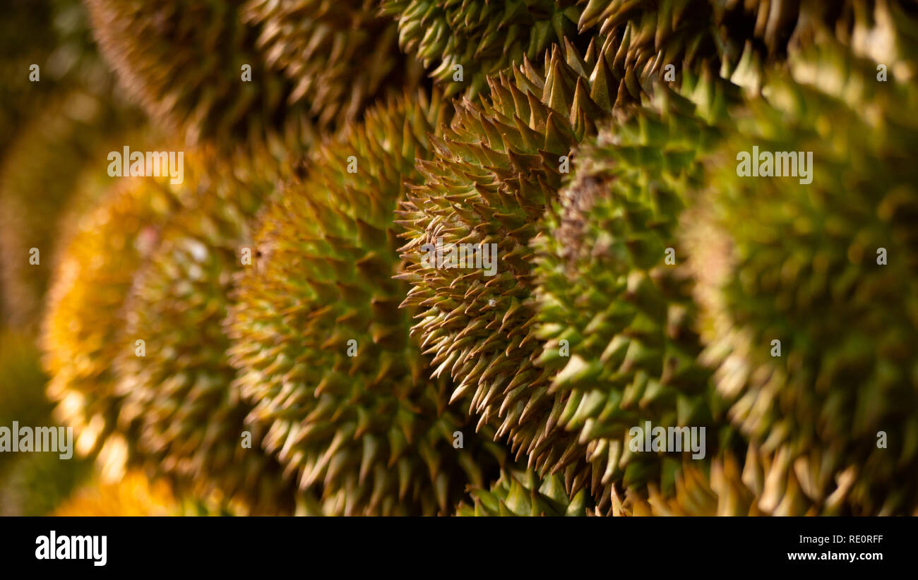 Durian Stock Photos & Durian Stock Images - Page 3 - Alamy