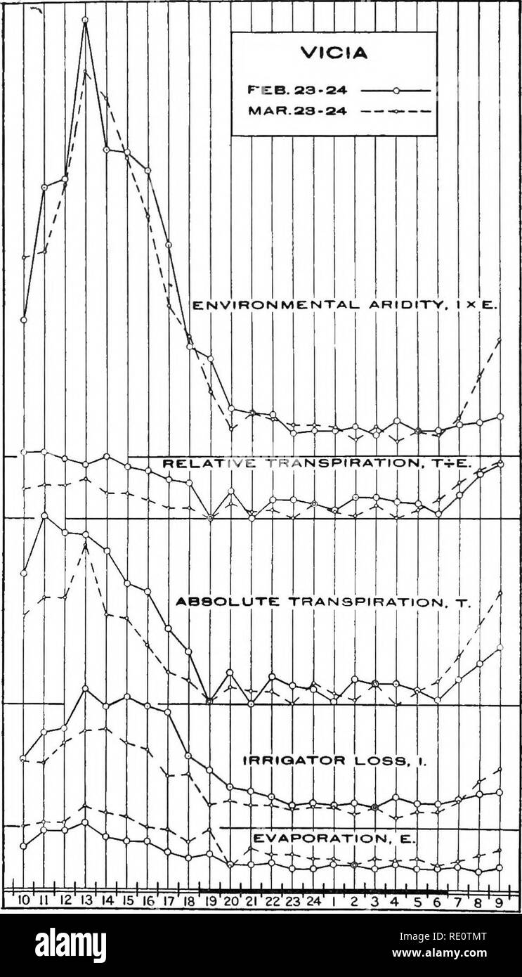 . The water-relation between plant and soil. Plants; Soil moisture. 38 WATER-RELATION BETWEEN PLANT AND SOIL. series; otherwise a more pronounced lag behind evaporation would have been here exhibited. The later graph falls more rapidly than the earlier one, however, which suggests, as in the case of Coleus, that incipient drying was more pronounced in the second series. The lower maximum for the second series may denote lower transpiring power, perhaps partly due to hardening, etc., of the older leaves and partly to incipient drying and actual wilting, which occurred with hours 12 to 16, as sh - Stock Image
