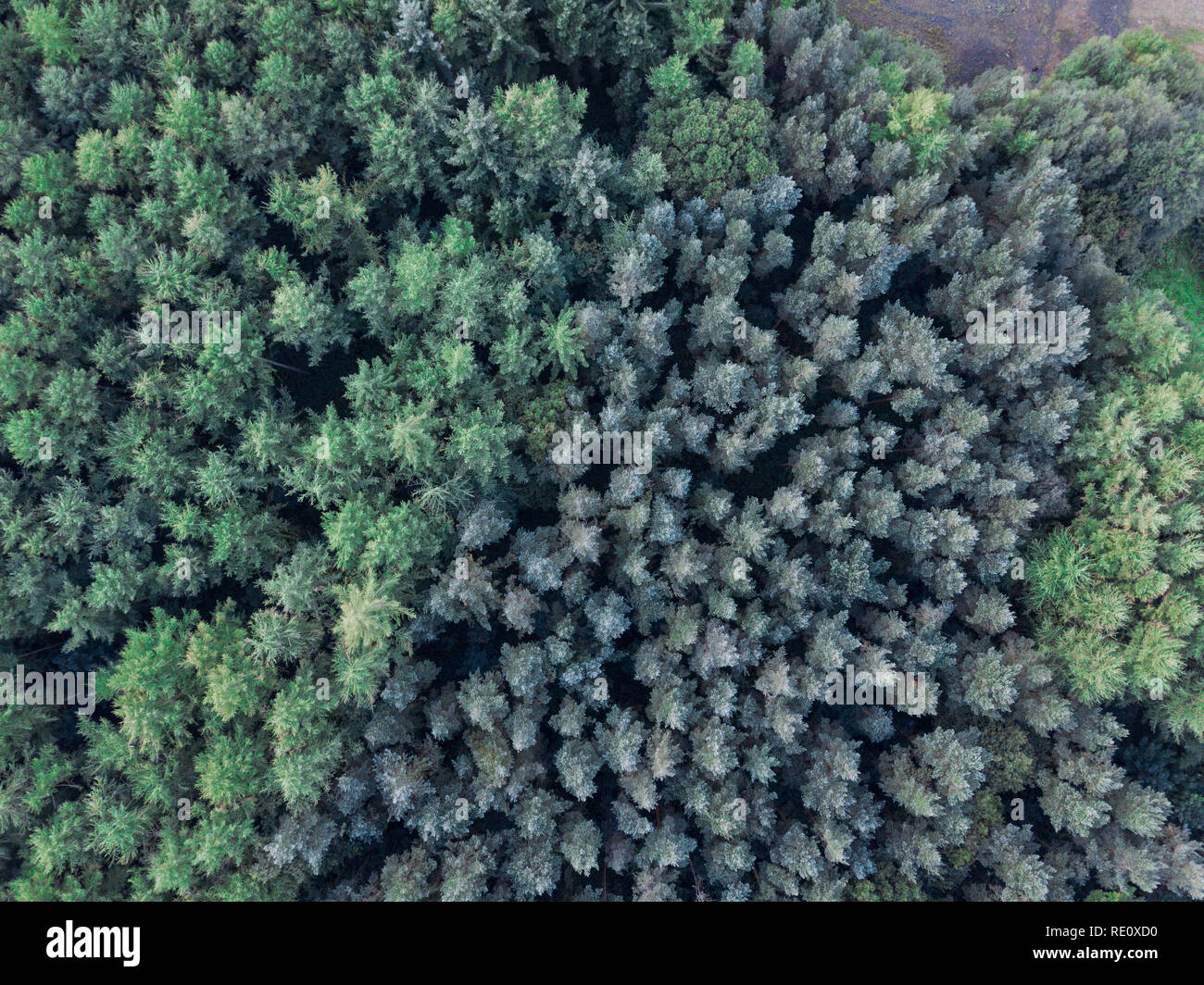 Green Trees from drone above - Stock Image