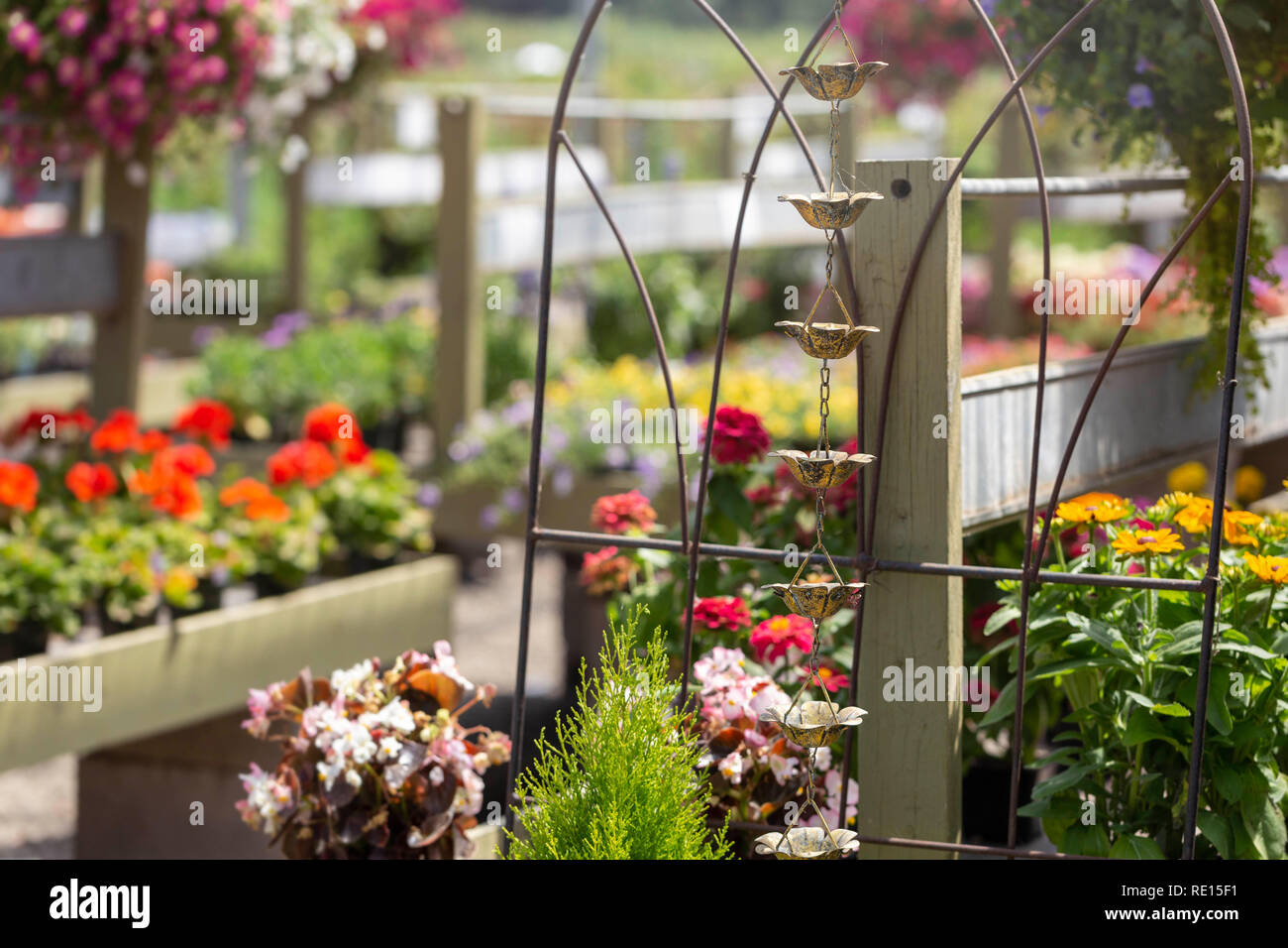 Rows of plants displayed for sale in a summertime garden center Stock Photo
