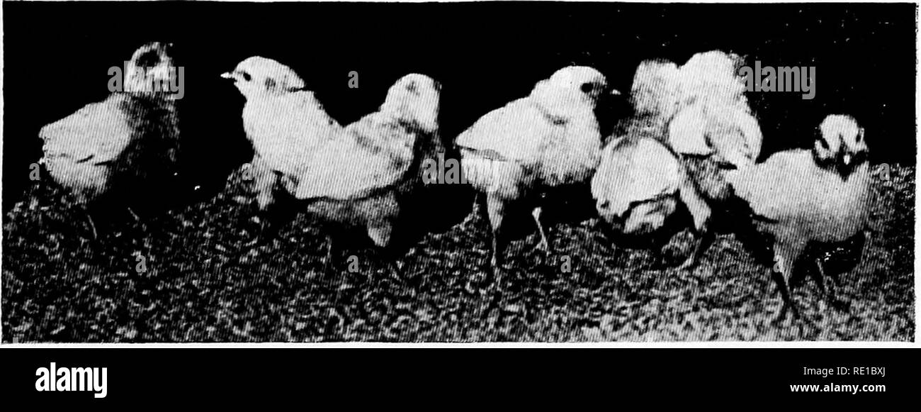Poultry diseases and their treatment  Poultry  Fig  45  Ten