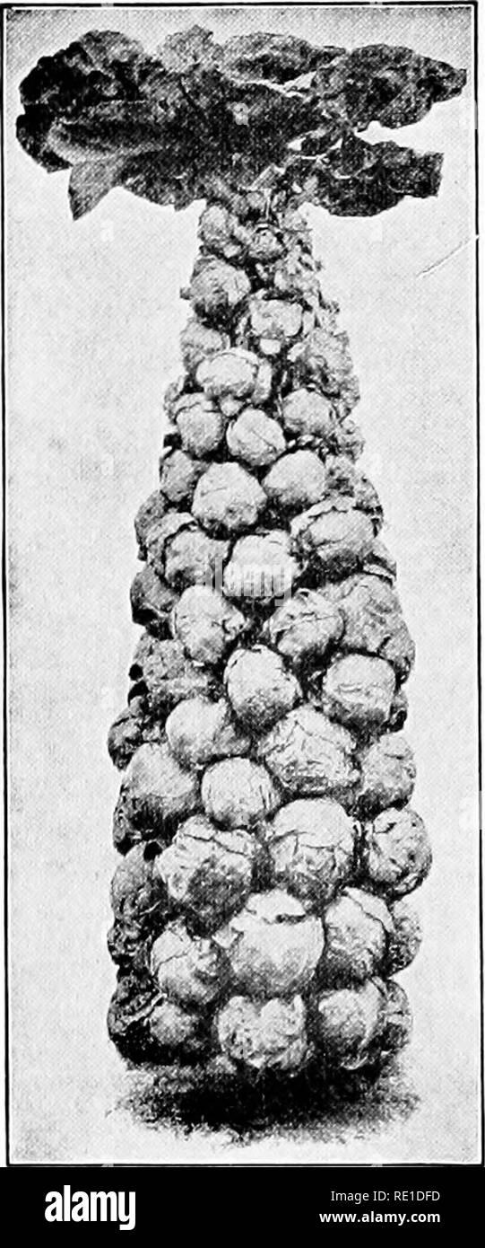 Amateur-Kuckel-Salk-Tube Massives Frauenquietschen