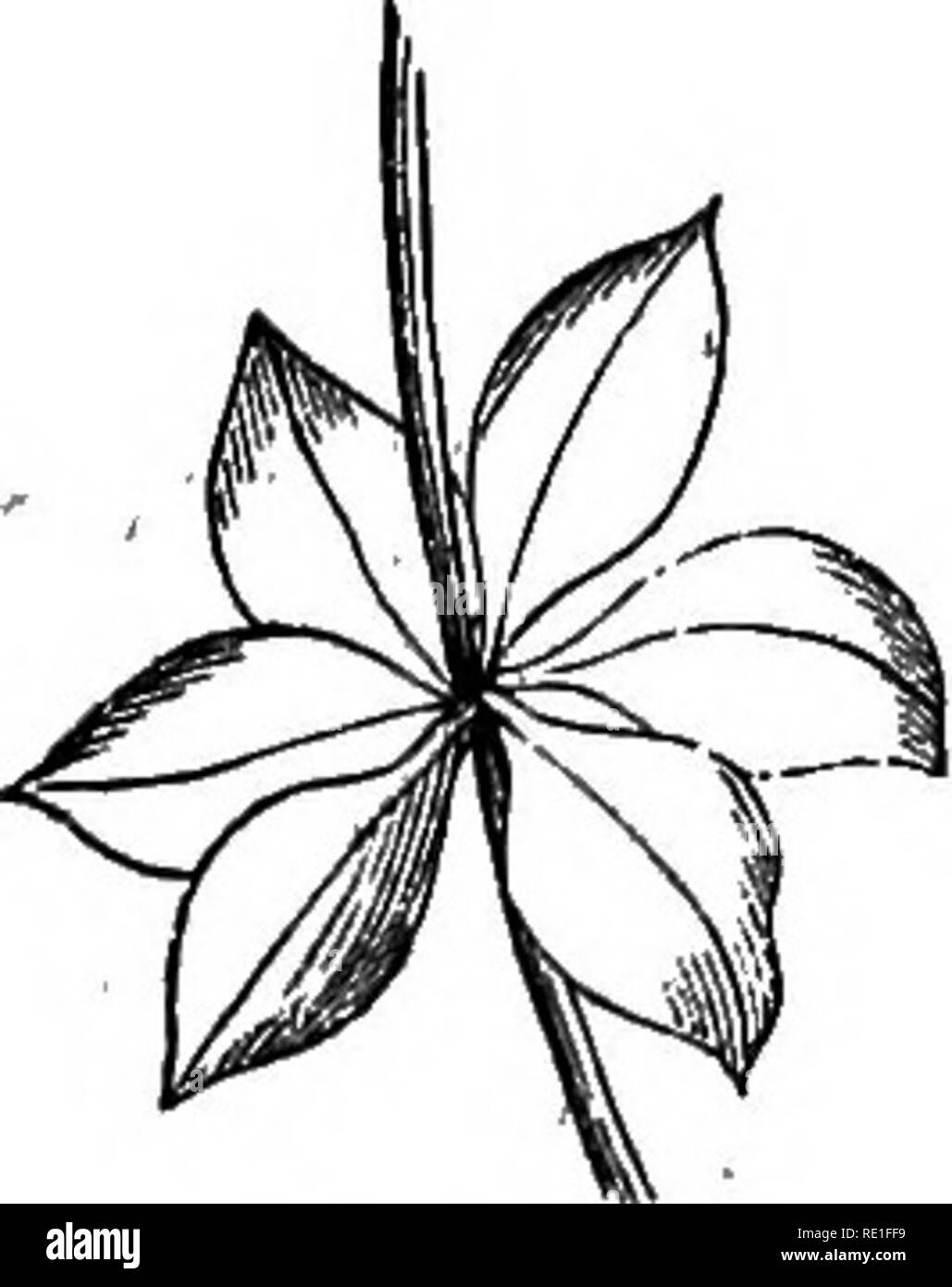 The Elements Of Structural Botany With Special Reference To The Study Of Canadian Plants Plant Physiology Plant Anatomy 108 Elements 01 S L Eucl Ubal Botany However They Are Extremely Thick And Succulent