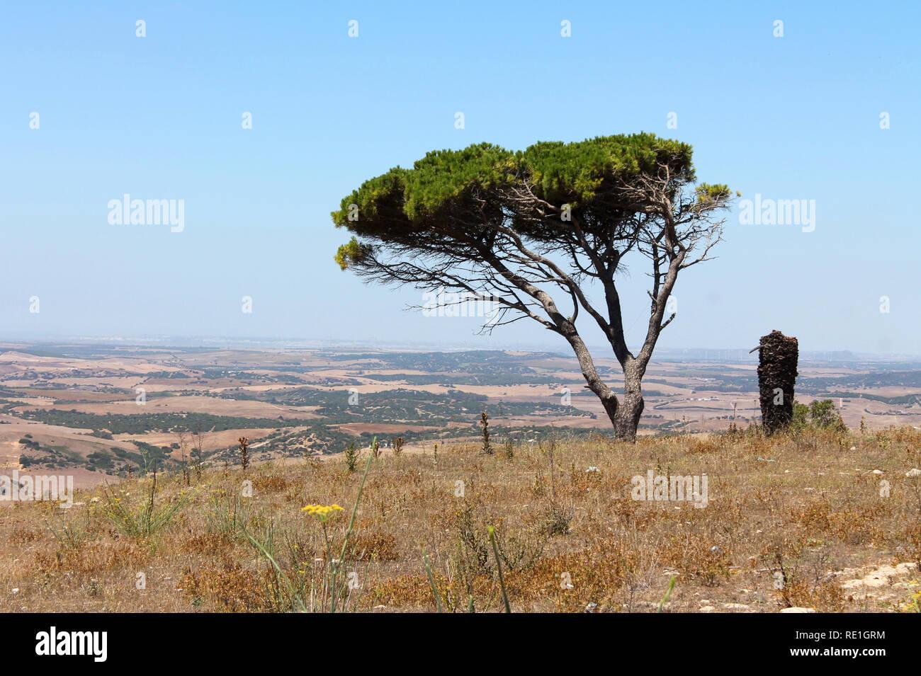Einsamer Baum auf einem Hügel in Andalusien Stock Photo
