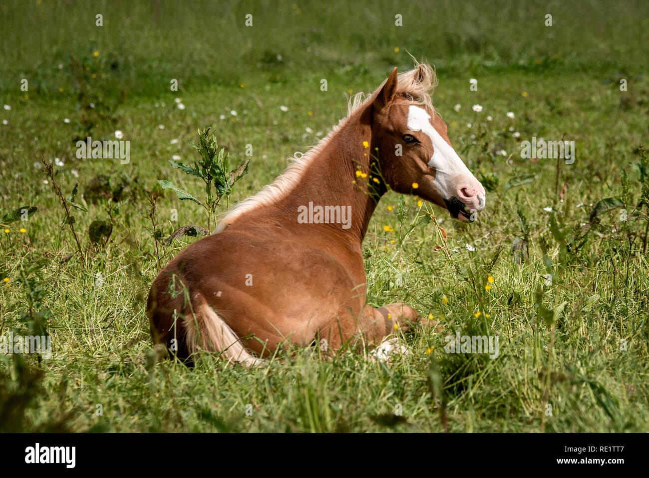 quarter horse foal RE1TT7