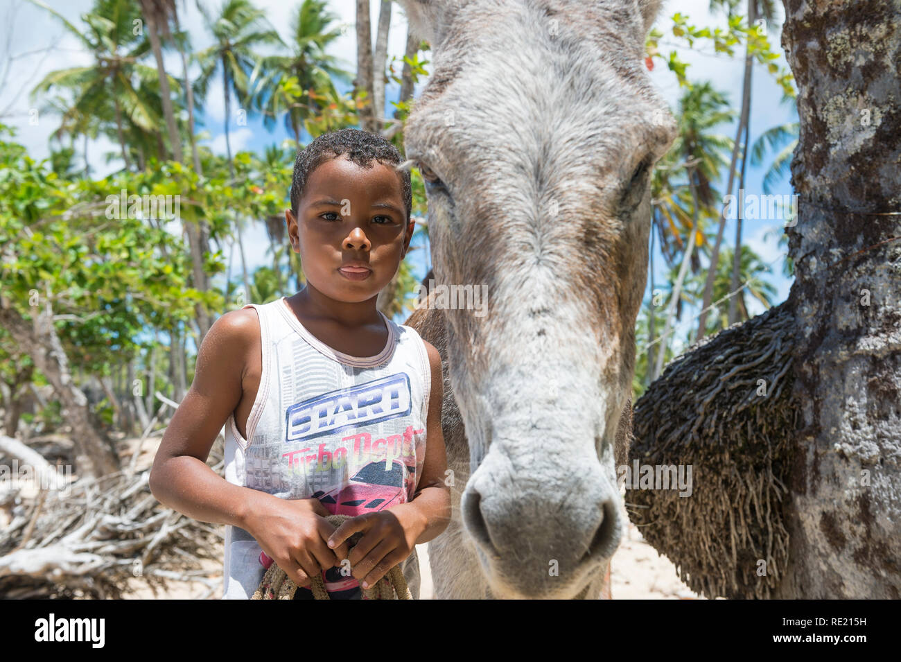 BAHIA, BRAZIL - MARCH 11, 2017: A mule stands with a young Brazilian on the palm-fringed shore of a Northeastern Brazilian beach. Stock Photo