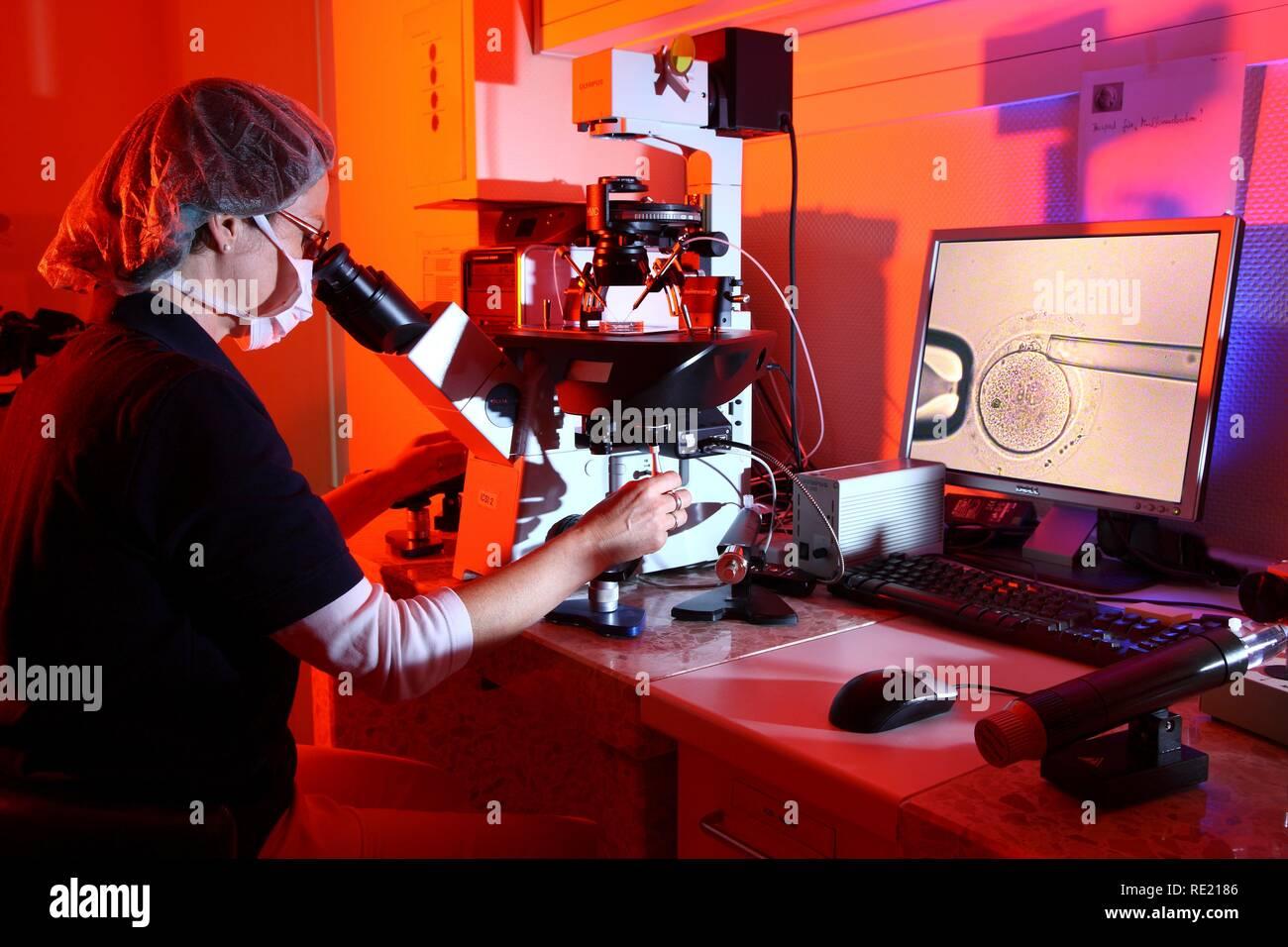 Polar body diagnosis, PBD, chromosomal genetic study of the fertilized ovum, Centre for Reproductive Medicine - Stock Image