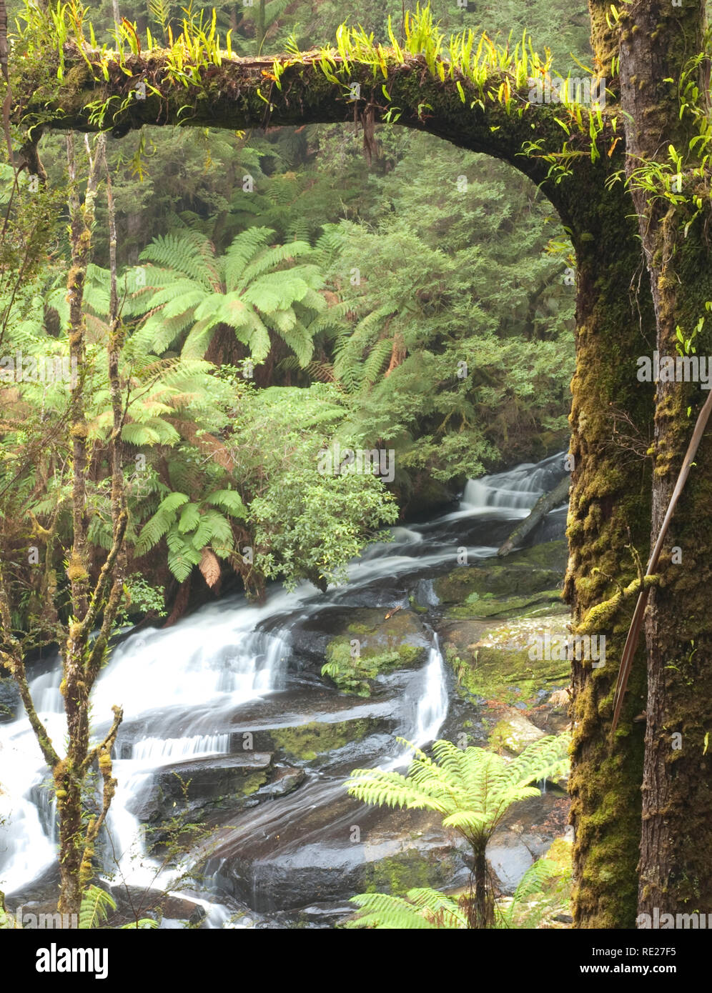Triplet Falls in the Great Otway National Park, Victoria, Australia - Stock Image