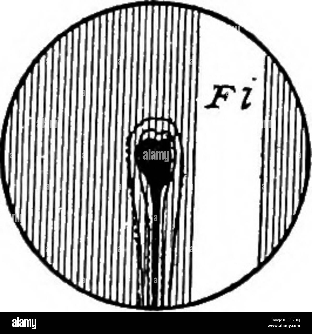 . The microscope; an introduction to microscopic methods and to histology. Microscopes. Fig. 136. Field of the Microscope showing the Light in the Center and to One Side. ' C Fl The light is in the center and illuminates the object. Exc Ft The light is at one side of the center and does not illuminate the object. (The field is not fully lighted, as a low power is used to center the object and the light).. Please note that these images are extracted from scanned page images that may have been digitally enhanced for readability - coloration and appearance of these illustrations may not perfectly - Stock Image