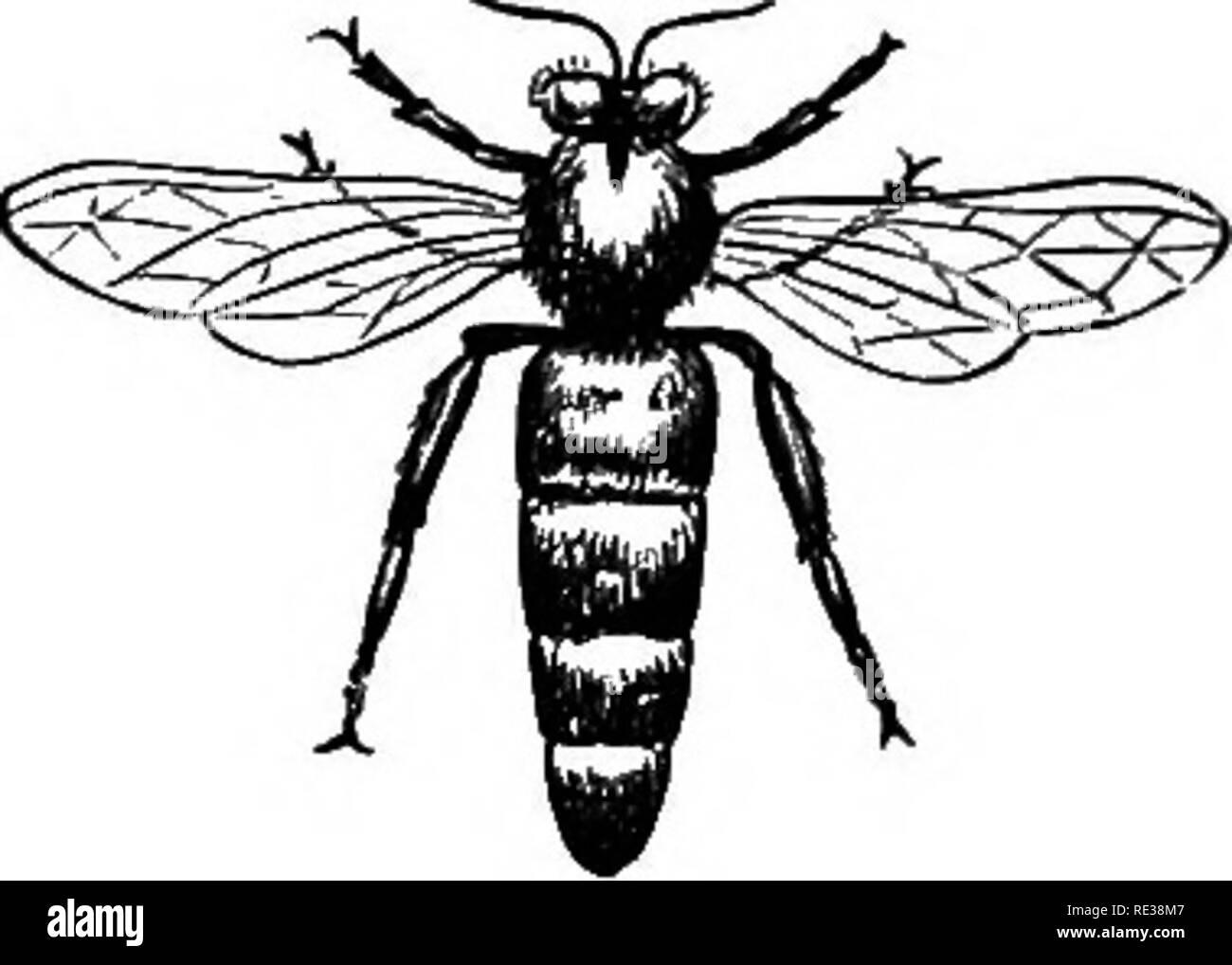 Queen Mother Bee Stock Photos & Queen Mother Bee Stock