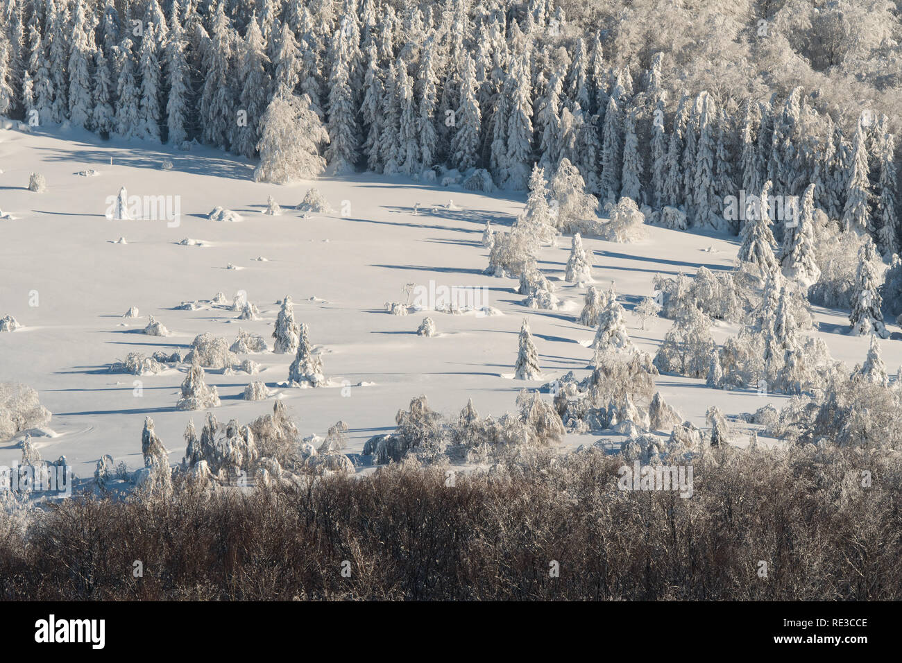 Beautiful snowy forest in the mountains. Winter landscape of the Bieszczady Mountains. Poland - Stock Image