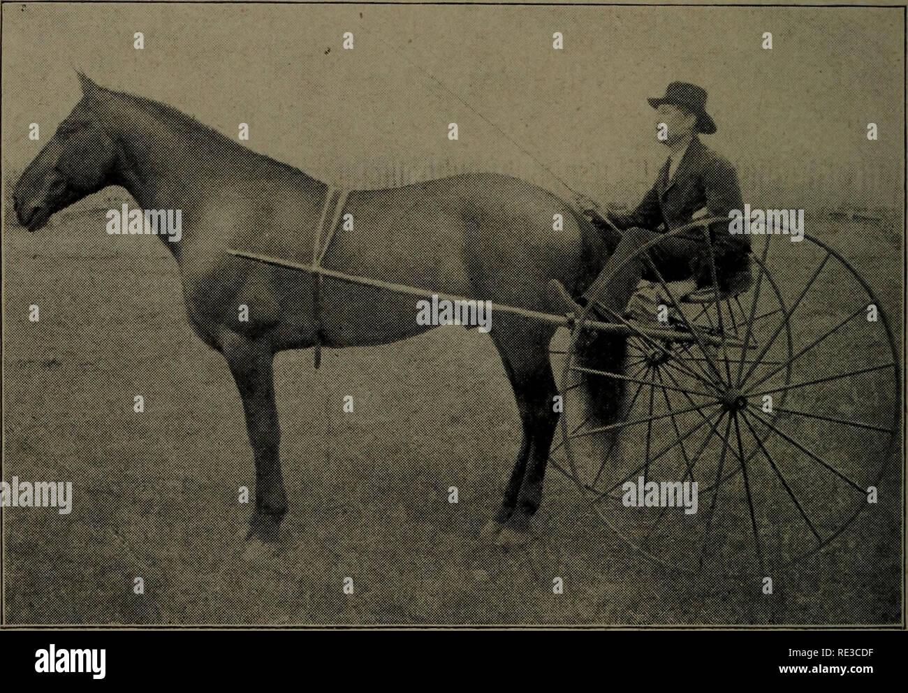 the horse tamer black stallion