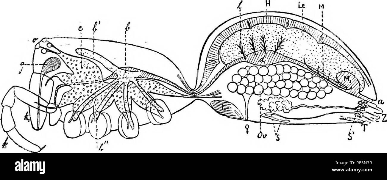 Spider Anatomy Black And White Stock Photos Images Alamy
