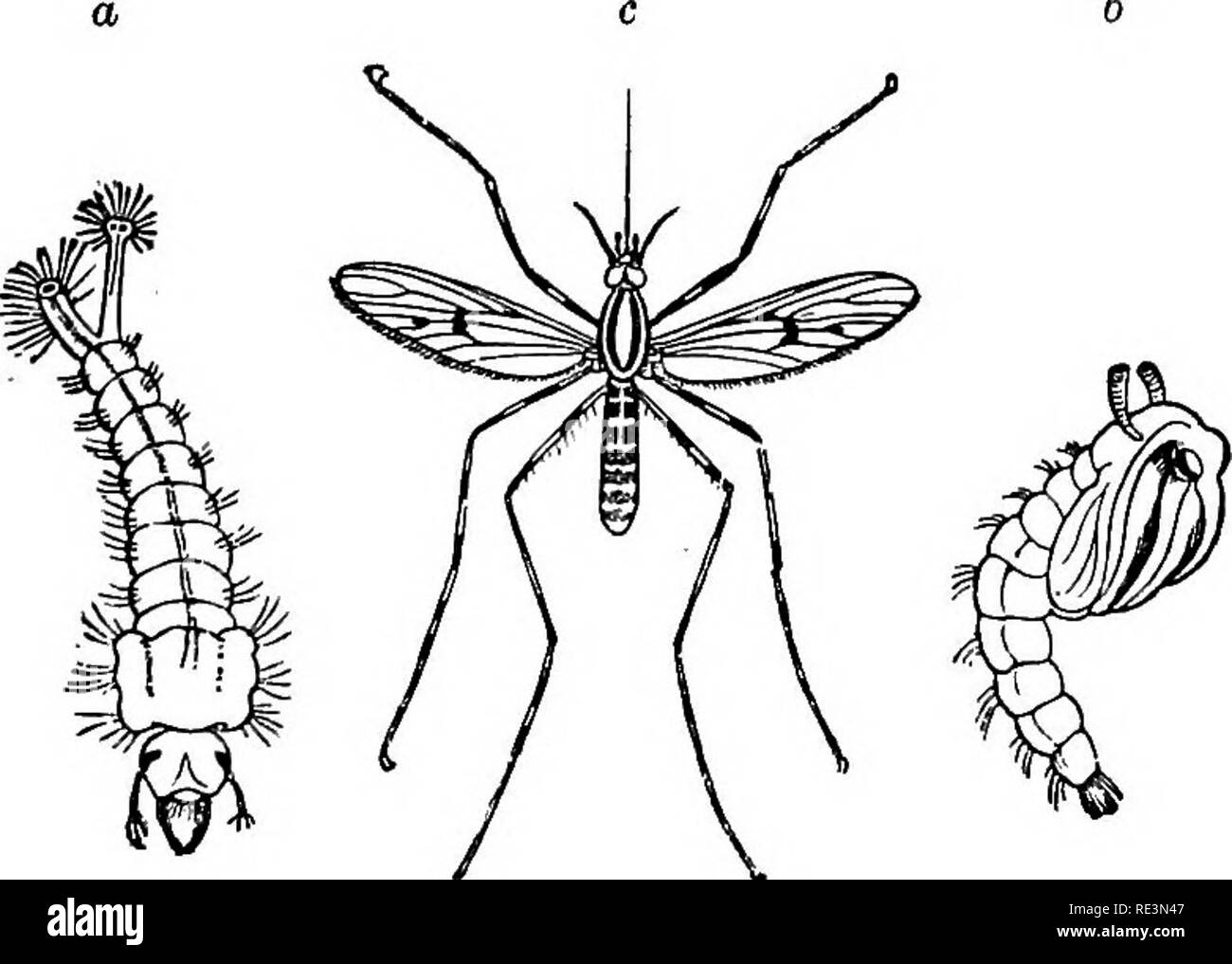 Text book of zoology  Zoology  276 Arthropoda  the thorax by