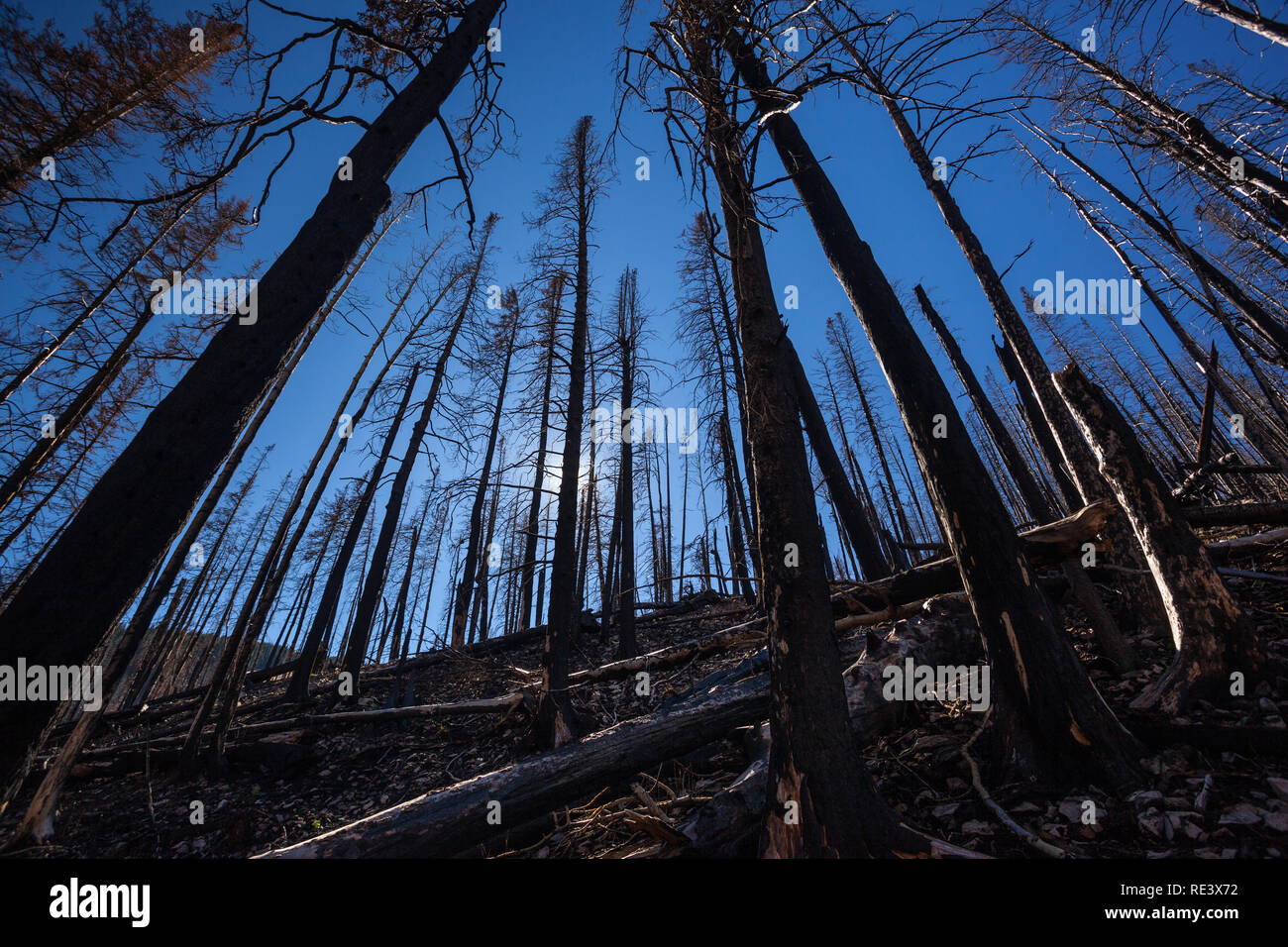 Lincoln National Forest, Lincoln County, New Mexico, USA - Stock Image