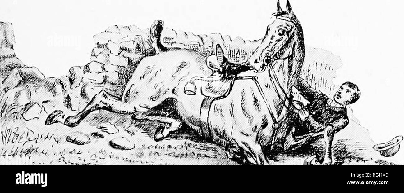 . Horse-breeding and management. Horse breeds; Horses. HANDLING AND BREAKING. 239 after a spill in limiting, and tlicMi it was iHit l)y my own, l)ut l)y a hiy imj)c'tii(iiis young' mare sent me to he lidden, who was a l)it too eager (n'er the stone walls of the Cotswolds.. >; 6it - /, n fa.y'^t- o i-i-i. cAi Uowi {<_'n((i. Please note that these images are extracted from scanned page images that may have been digitally enhanced for readability - coloration and appearance of these illustrations may not perfectly resemble the original work.. Adye, Frederic. London, R. A. Everett & Co - Stock Image