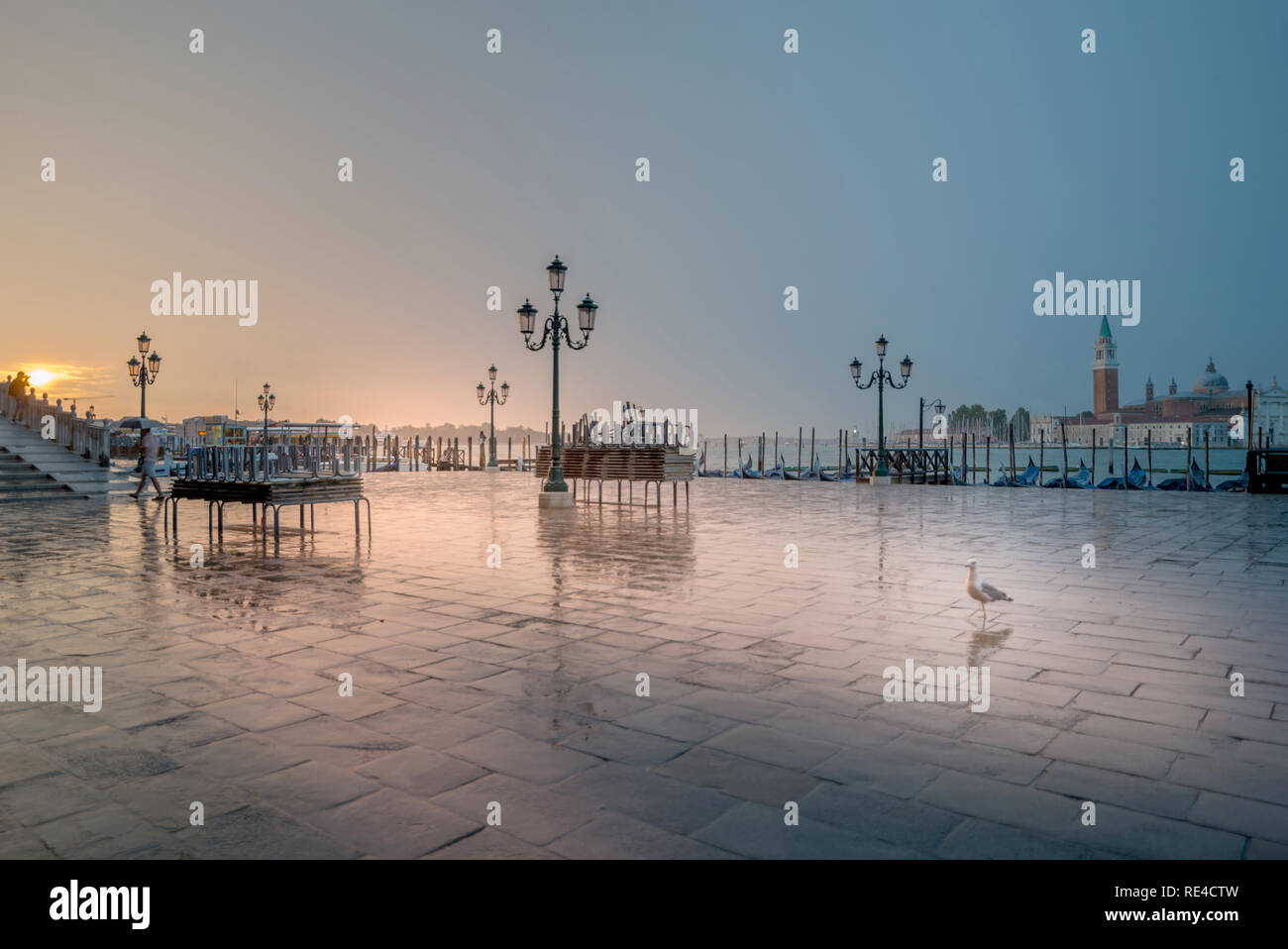 Jonathan Livingston in Venice - Stock Image