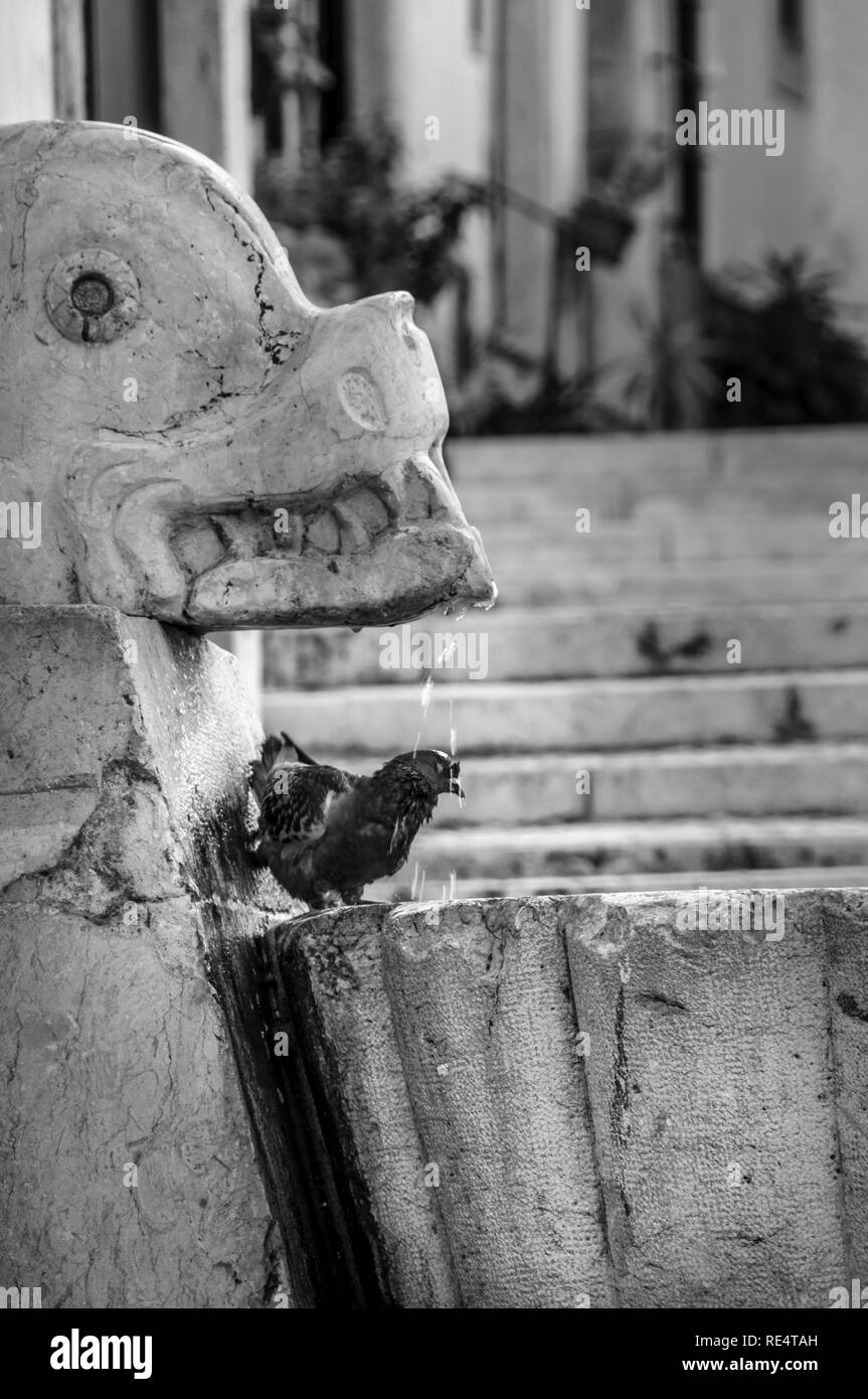 A pigeon cooling in a fountain on a hot day in a  Lisbon, Portugal - Stock Image