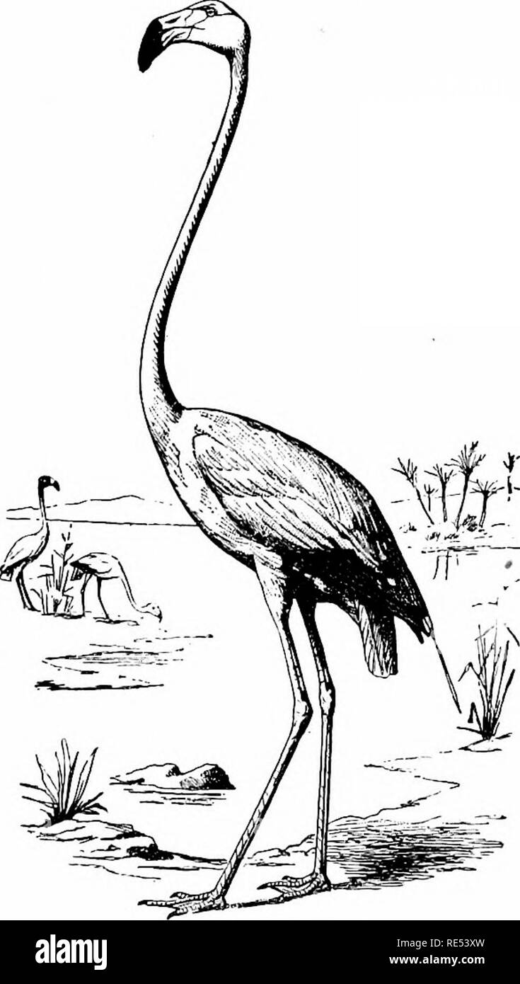 bent by black and white stock photos images alamy Sandhill Crane Clip Art the birds of eastern north america known to occur east of the nineteenth meridian