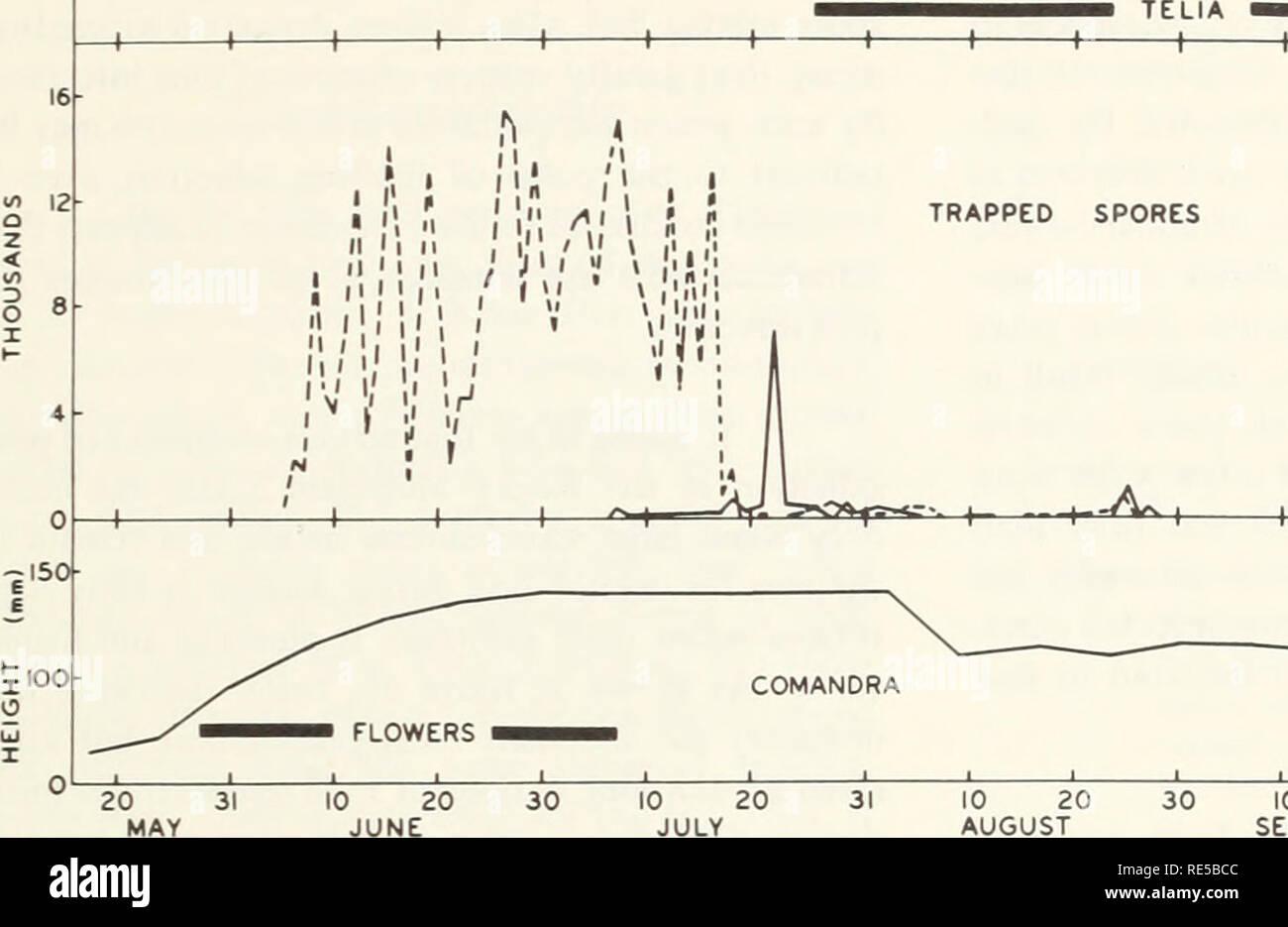 Cronartium Comandrae In The Rocky Mountain States Cronartium