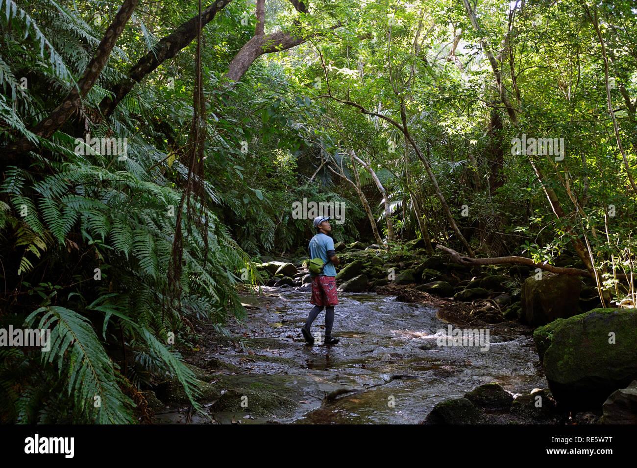 trekking through jungle stream in lush rainforest of Iriomote-jima, Okinawa, Japan - Stock Image