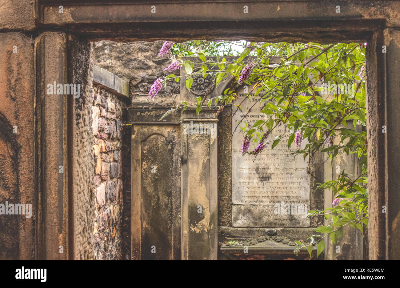 Edinburgh, Scotland / United Kingdom - July 29 2018:  A lilac tree is blossoming inside an old mausoleum of a Scottish soldier during the summer. - Stock Image