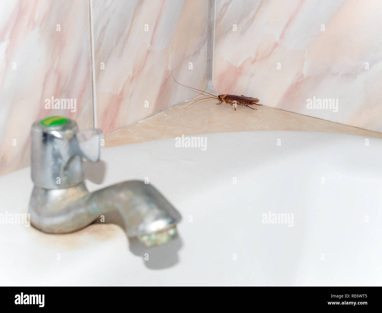 Close-up image of cockroach hiding in corner in house on background of water closet. - Stock Image