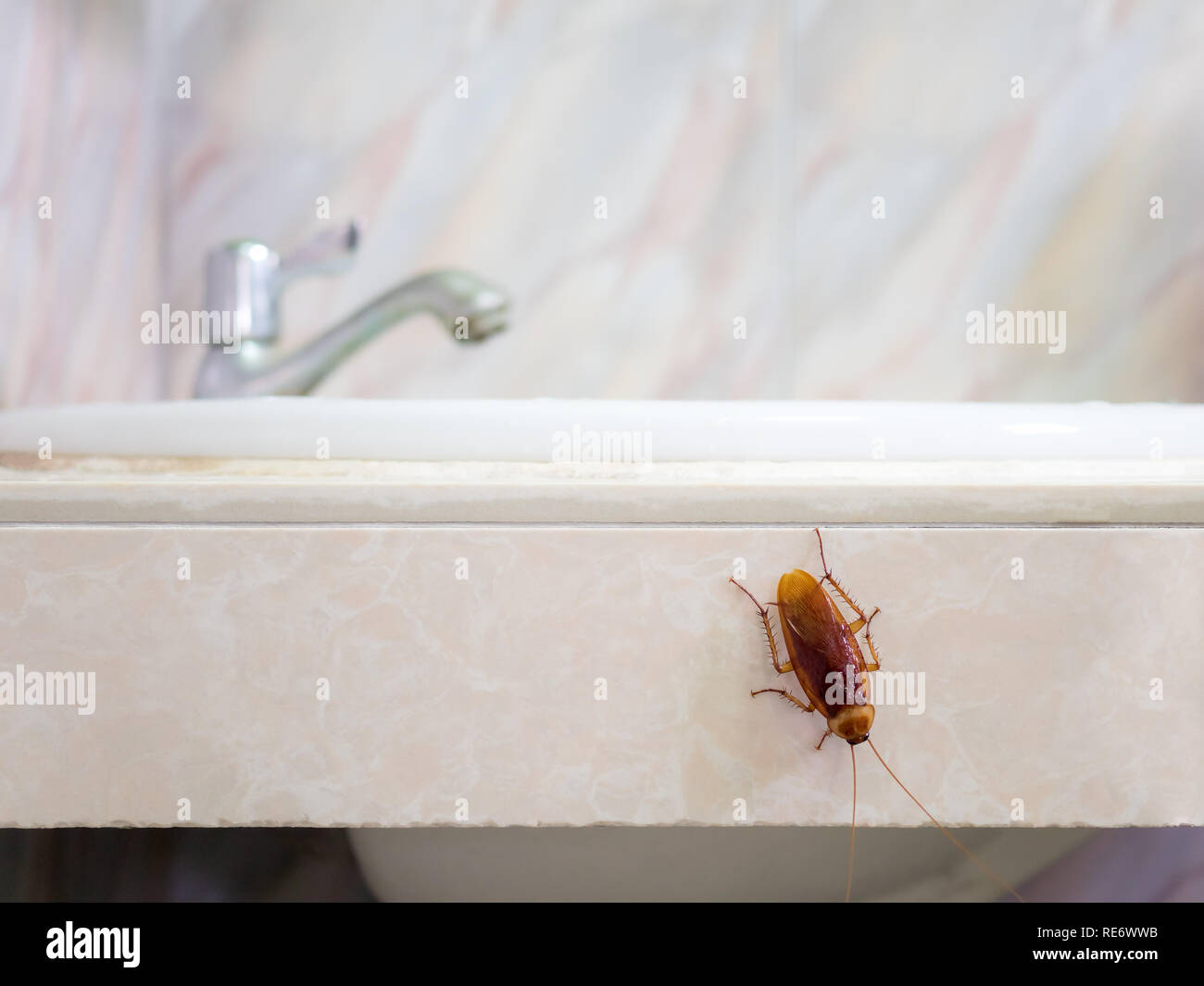 Close-up image of cockroach in house on background of water closet. - Stock Image