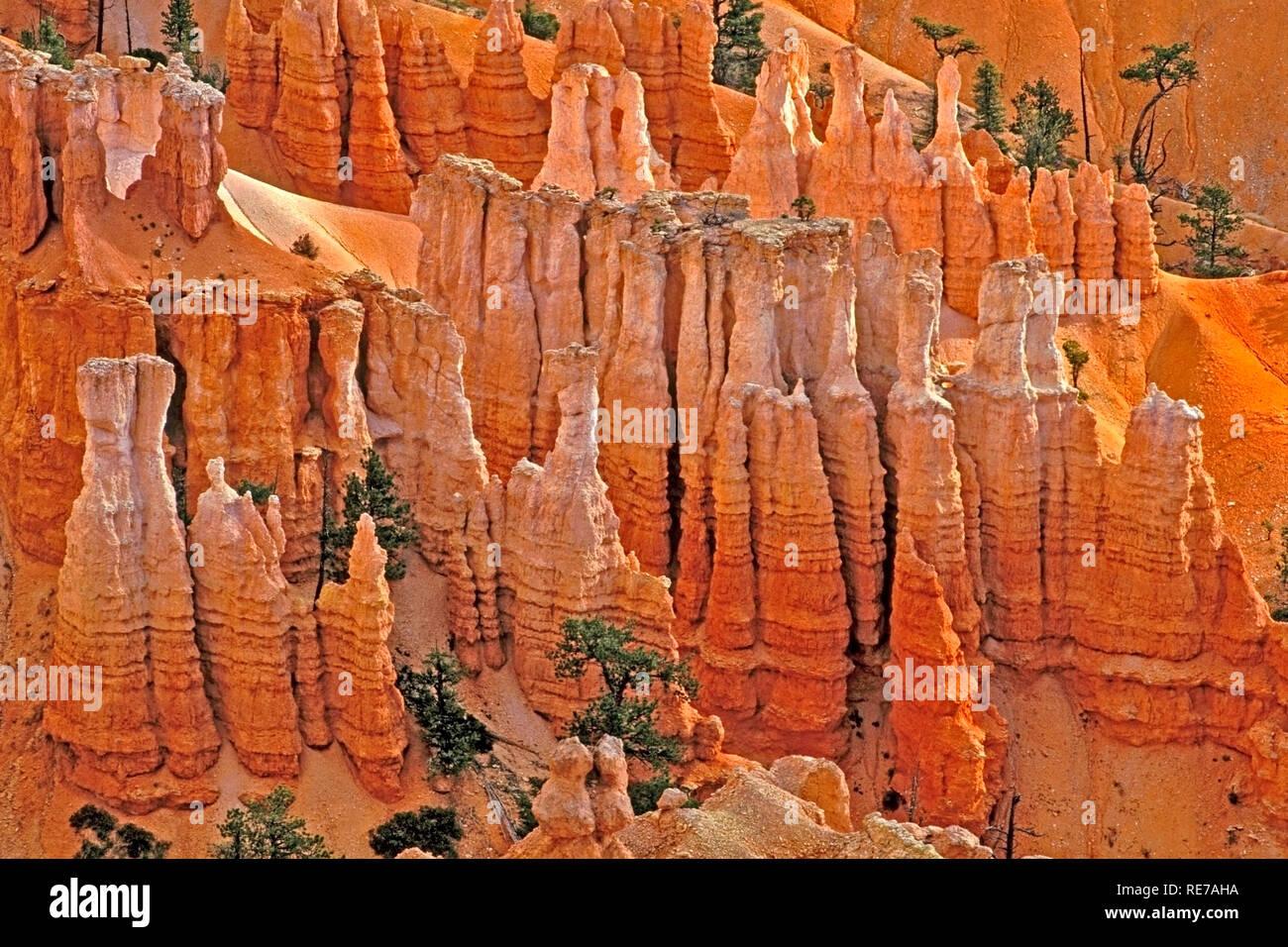 Limestone Rock Formations, Bryce Canyon National Park, Utah, USA - Stock Image