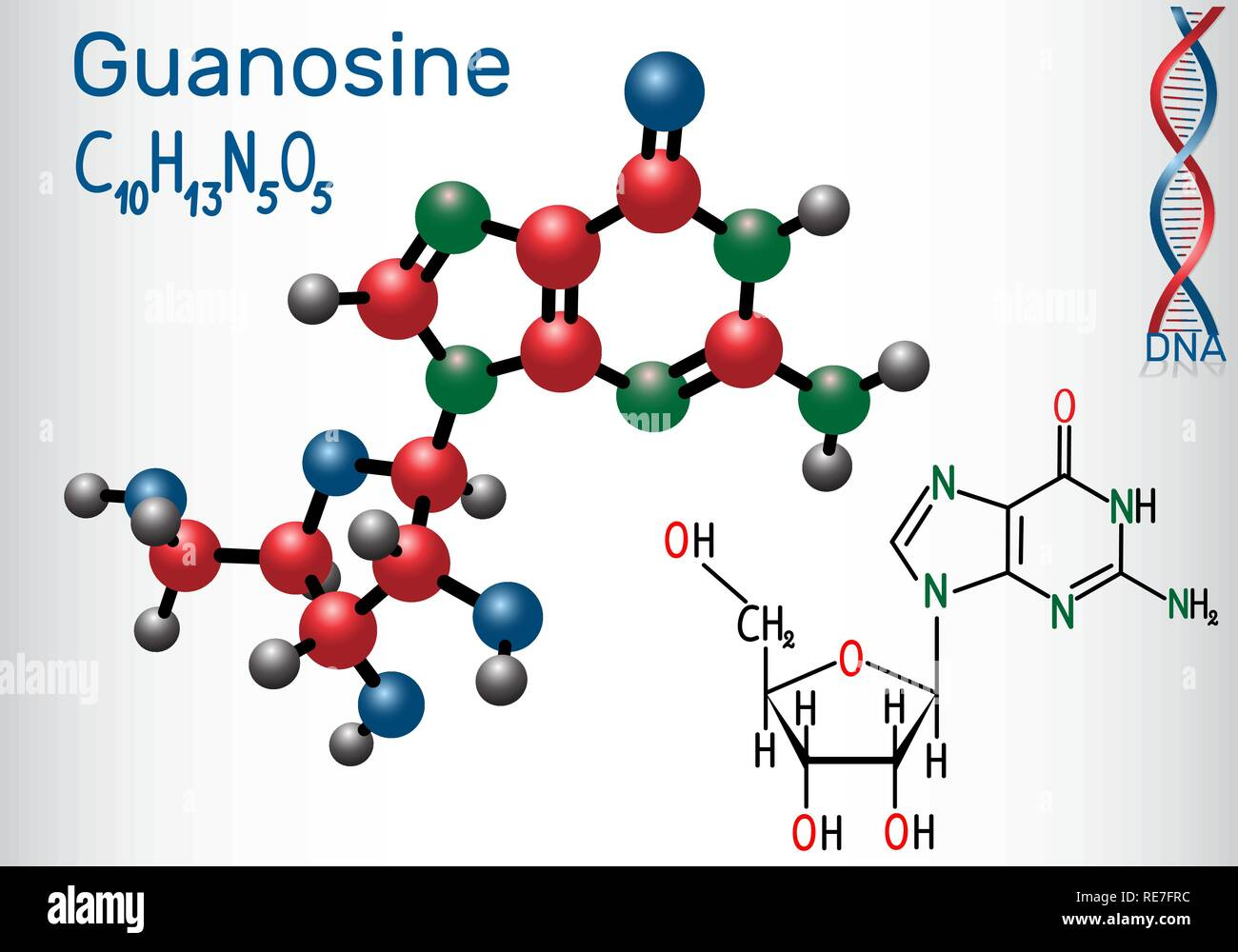 Guanosine - purine nucleoside molecule, is important part of GMP, GDP, cGMP , GTP, RNA, DNA. Structural chemical formula and molecule model. Vector il - Stock Image