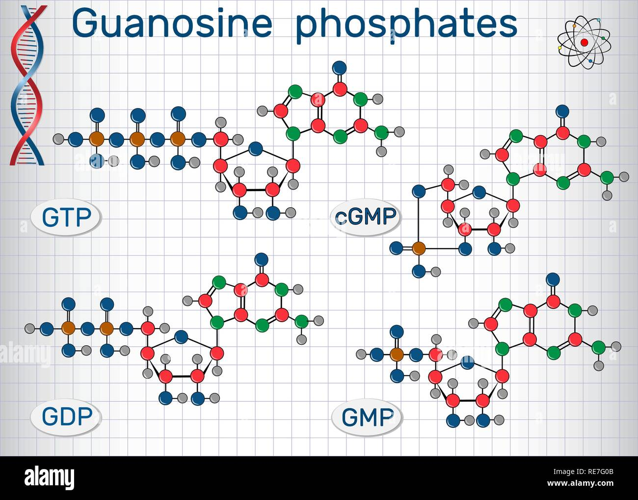Guanosine phosphates (guanosine triphosphate, guanosine diphosphate, guanosine monophosphate, cyclic guanosine monophosphate). Sheet of paper in a cag Stock Vector