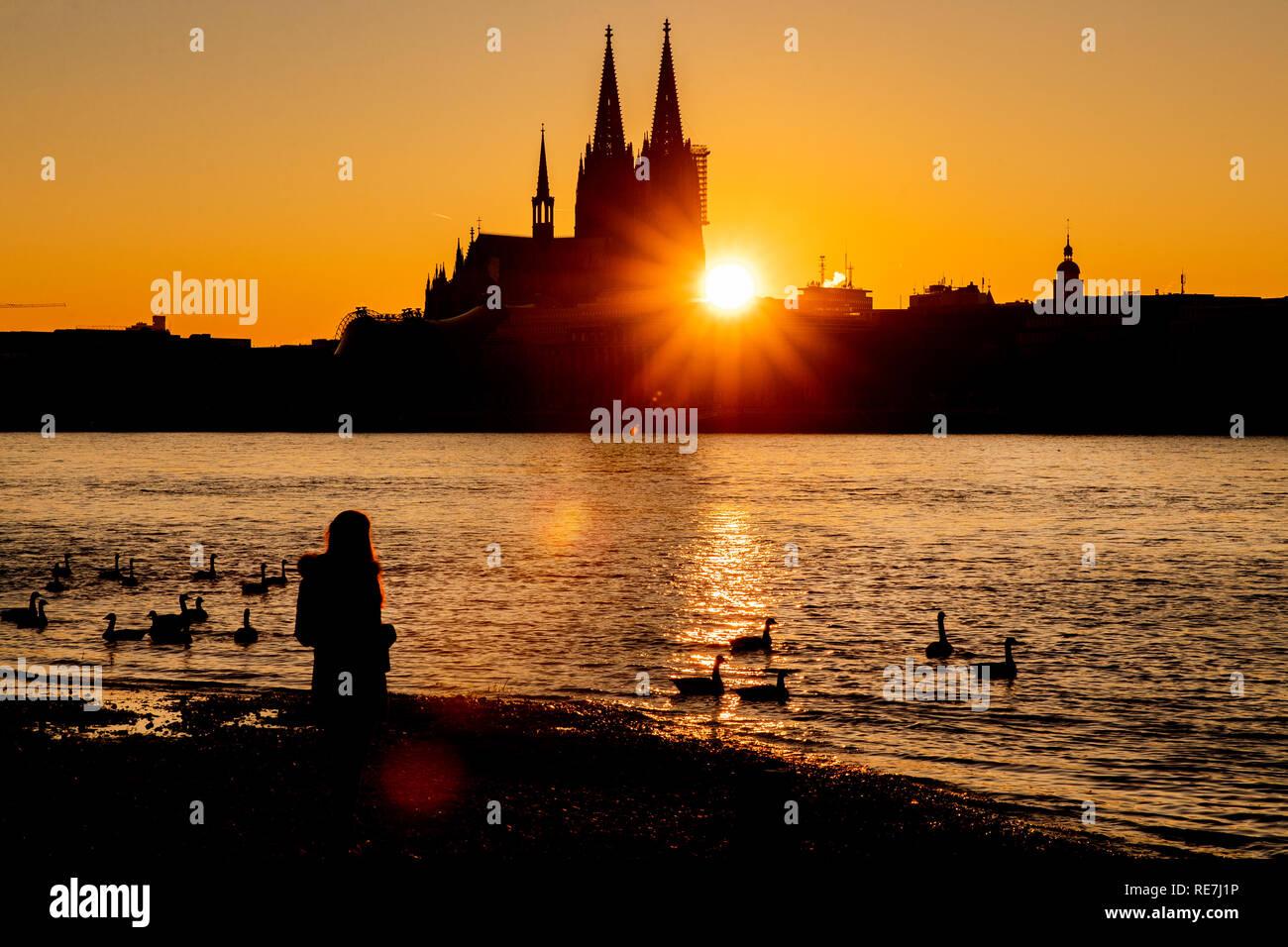 Eine Frau steht bei Sonnenuntergang am Ufer des Rheins. Im Hintergrund zeichnet sich der Kölner Dom ab. - Stock Image