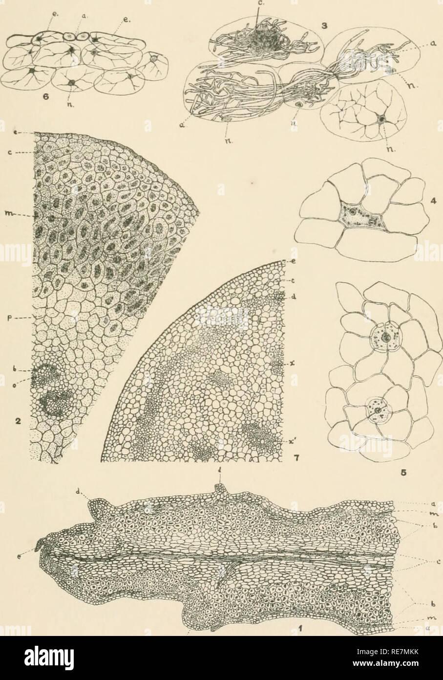 Map Of New York Botanical Garden.Contributions From The New York Botanical Garden Plants Bull Torr