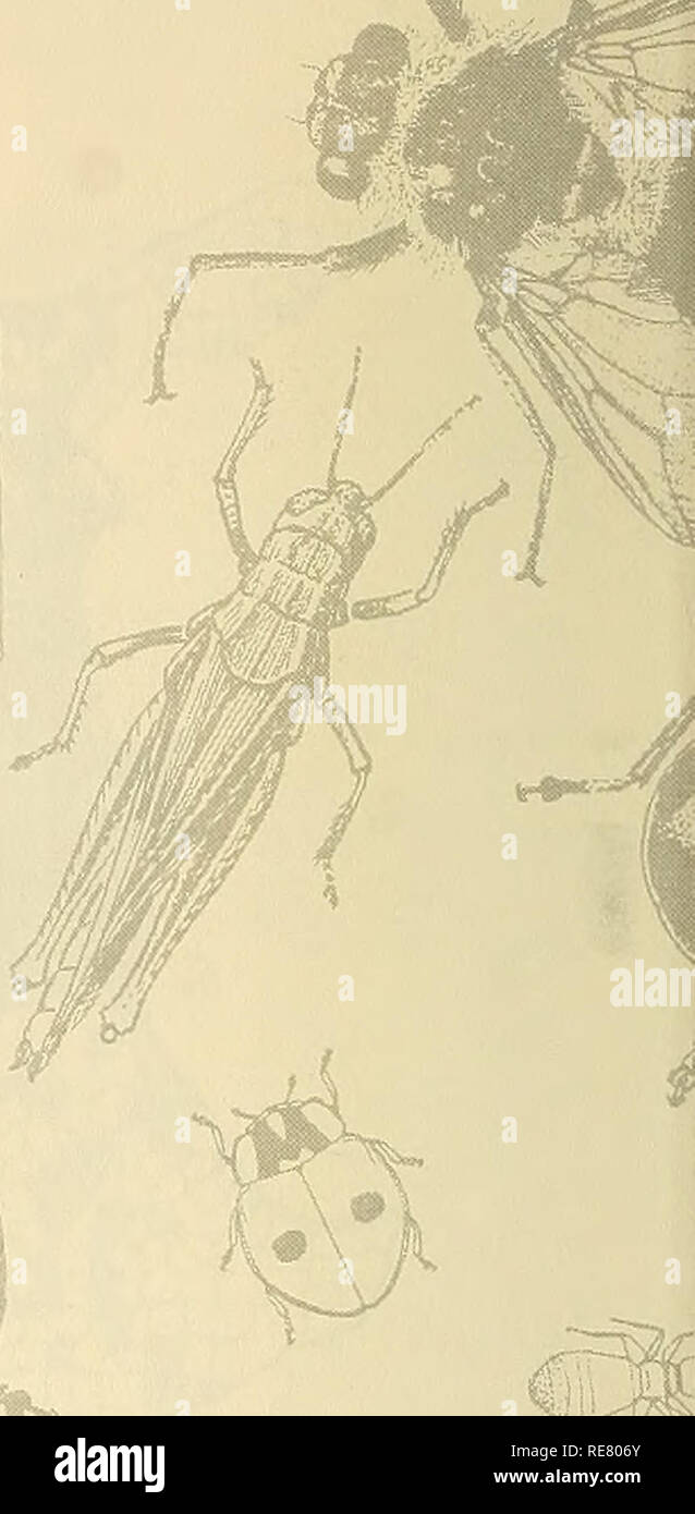 """. Cooperative economic insect report. Beneficial insects; Insect pests. OSTAGE & FEES PAID Unitad States Department of Agriculture ;i L'Jv""""t 'j:>r :sL liH» M i^ii jjiGOi 0001 US ENTONOLGGY LiSRARY 0£PT ENTOM NATIONAL MUSEUM ViASHlN&TGN DC 2C56C. Please note that these images are extracted from scanned page images that may have been digitally enhanced for readability - coloration and appearance of these illustrations may not perfectly resemble the original work.. United States. Animal and Plant Health Service. Plant Protection and Quarantine Programs; United States. Bureau of E - Stock Image"""